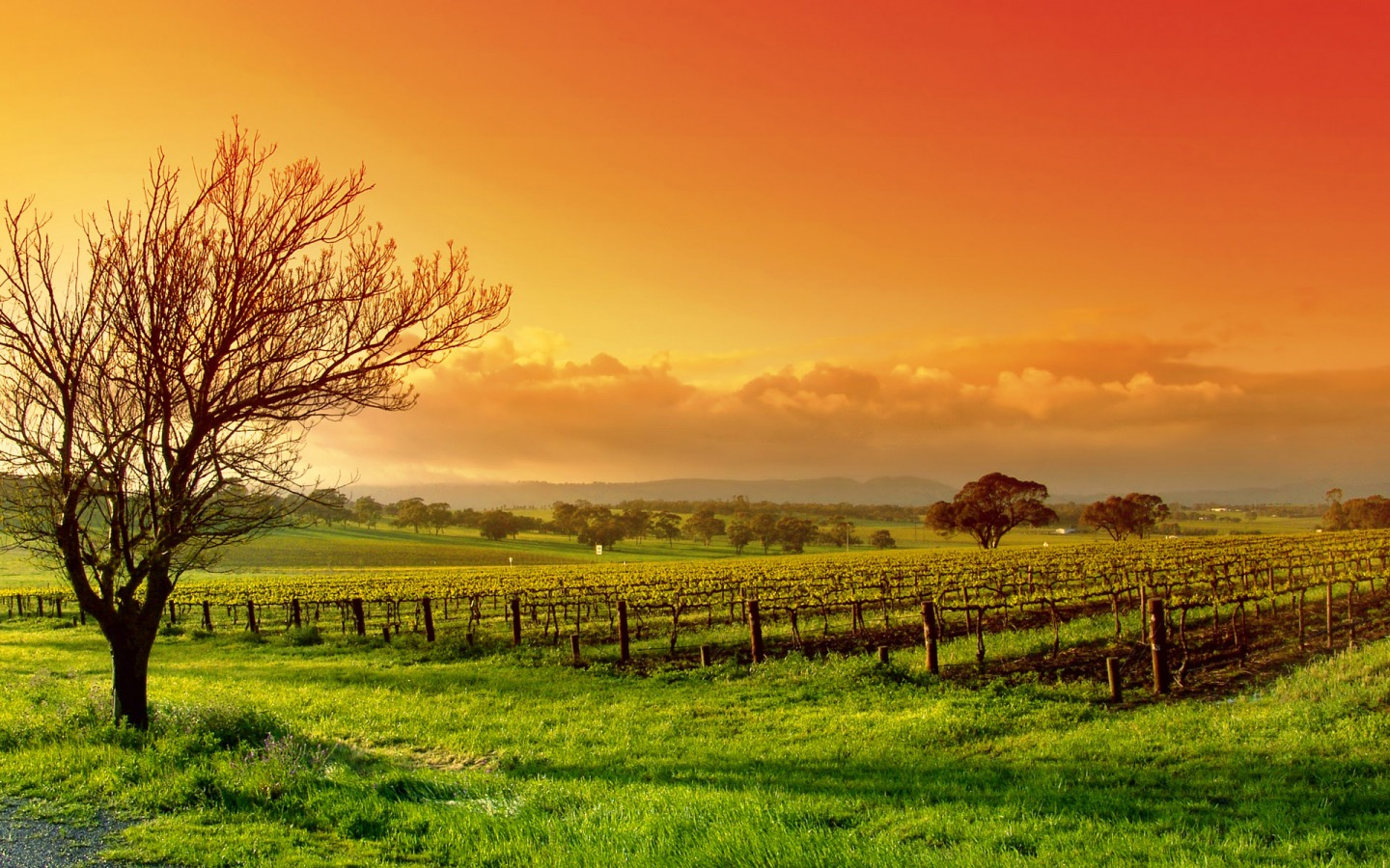 Free Vineyard Wallpaper