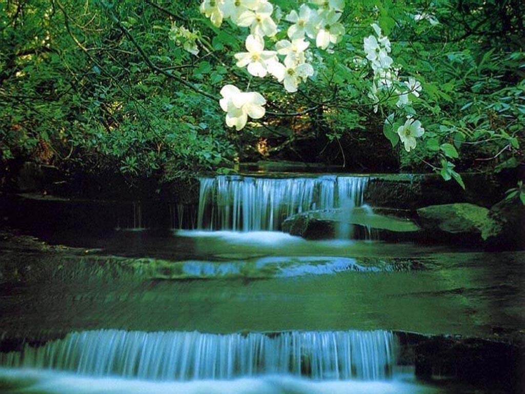 53 Backyard Garden Waterfalls Pictures of Designs