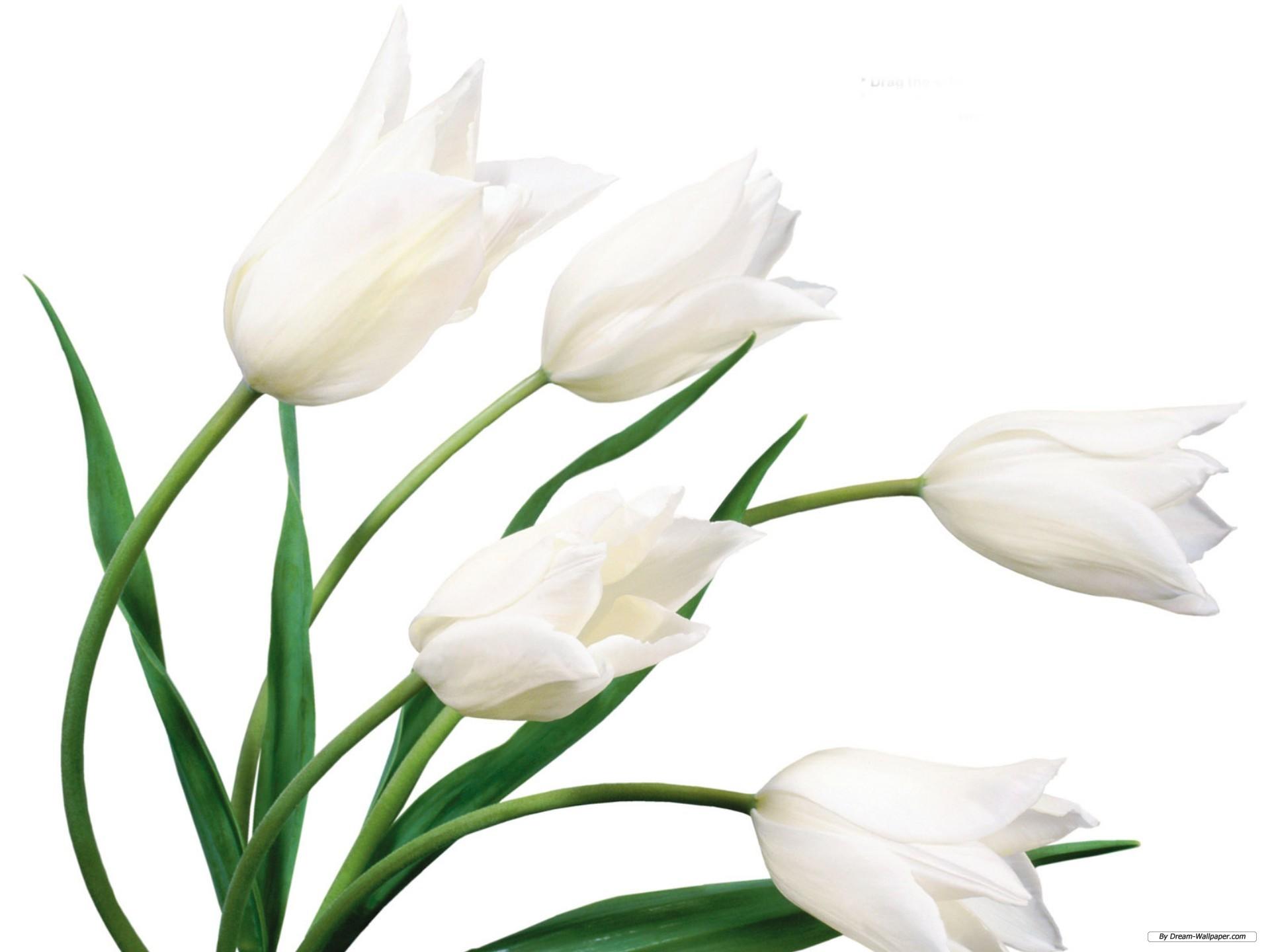 Free White Flowers Wallpaper