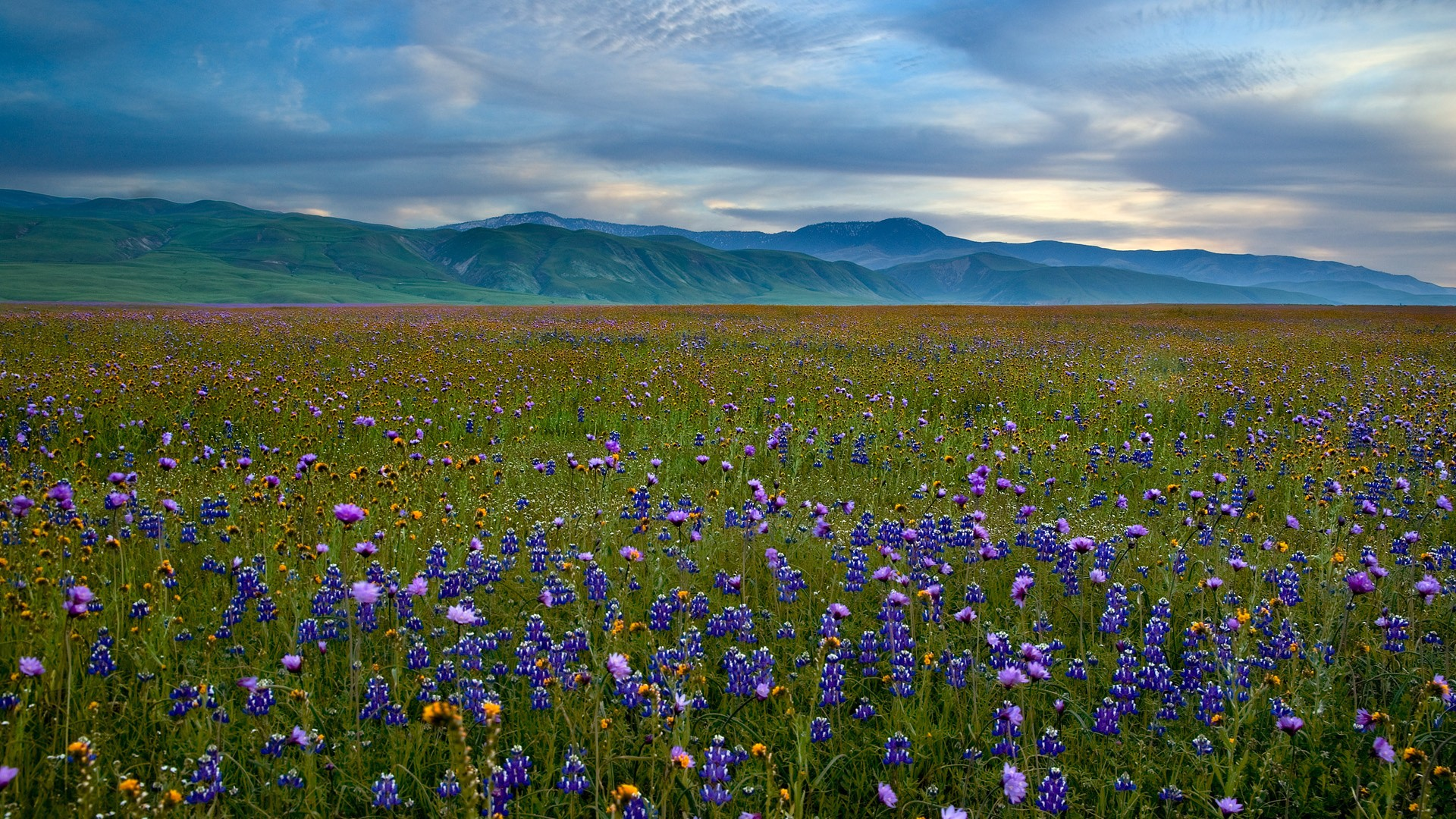 Free Wildflower Meadow Wallpaper