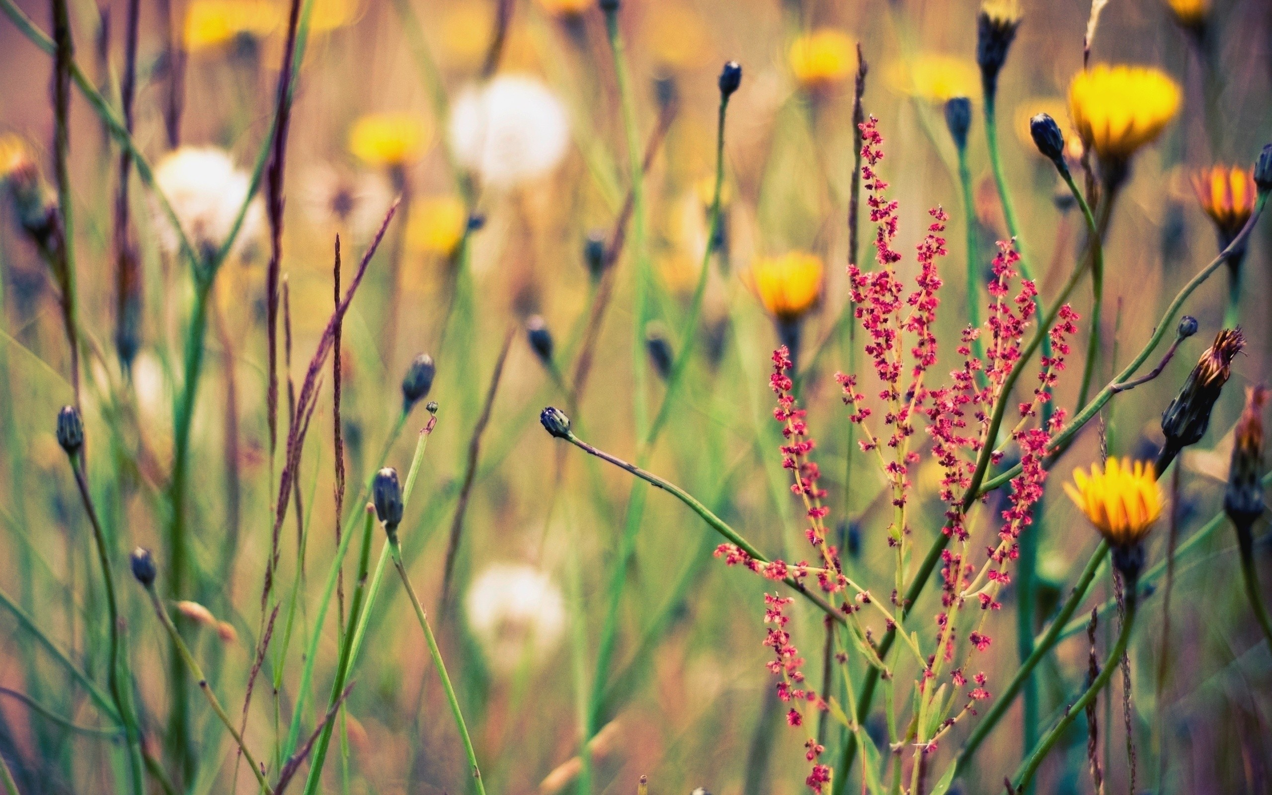 Download Wildflower Background 37094