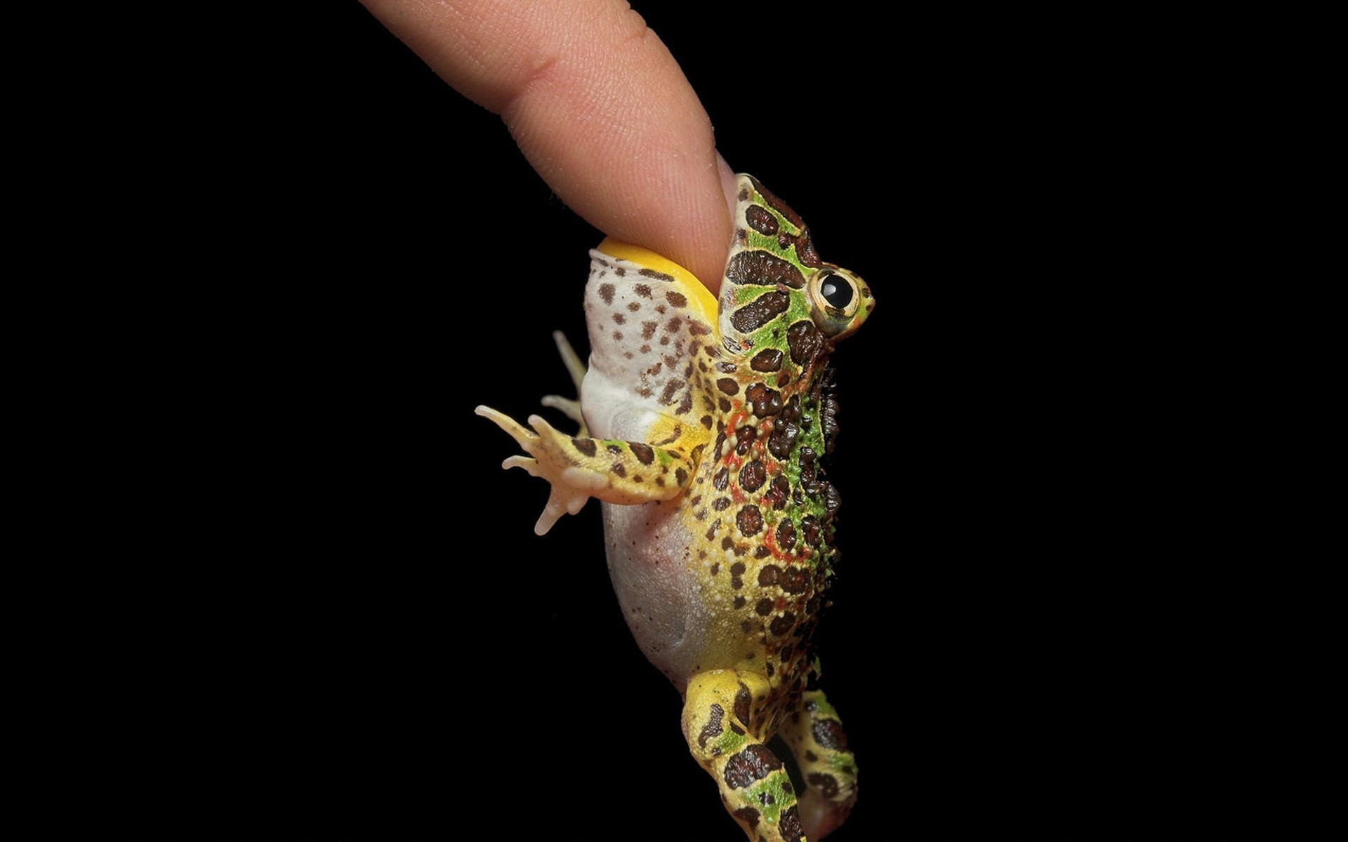 Frog Bite Finger