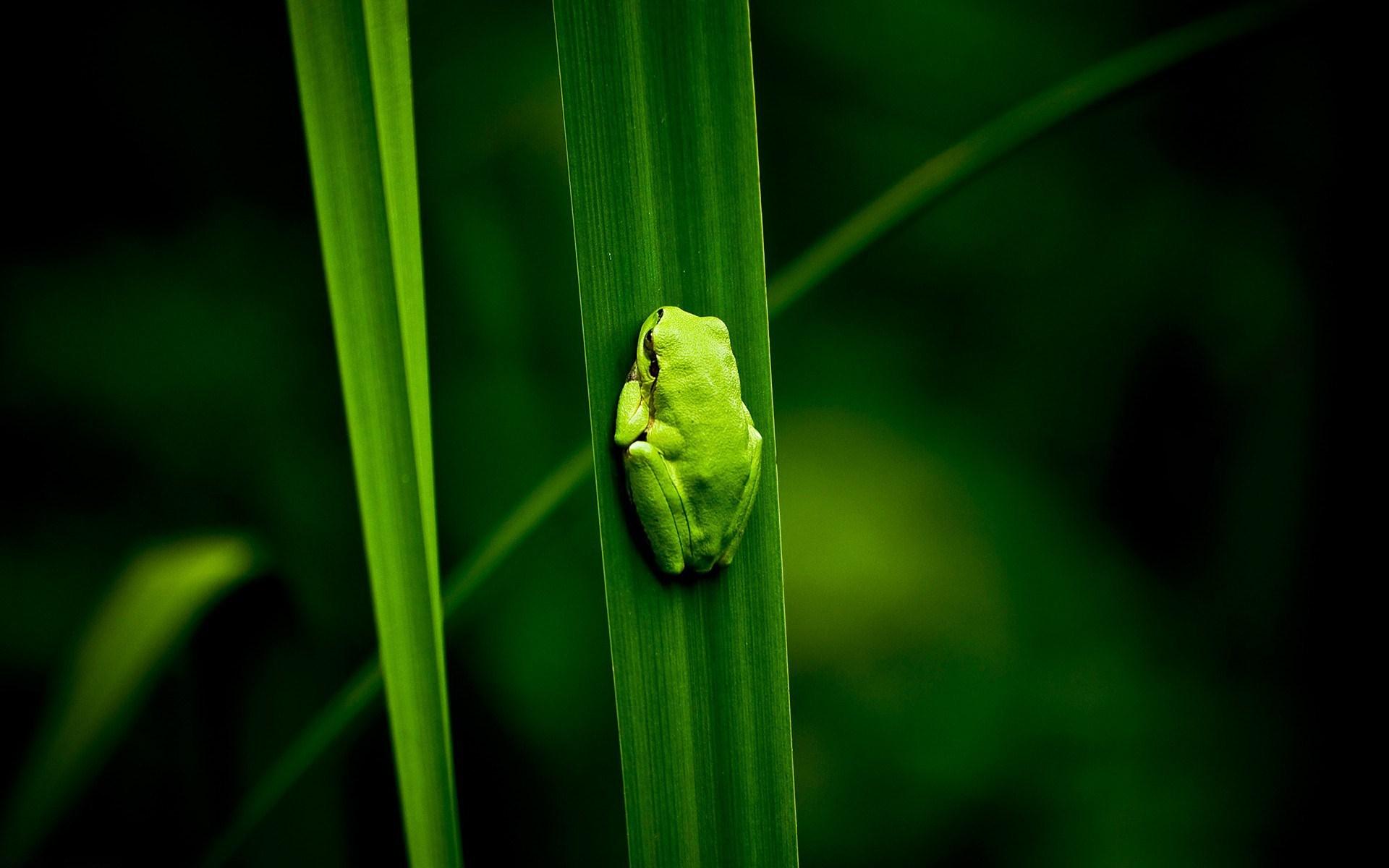 Frog Green Plants Bog