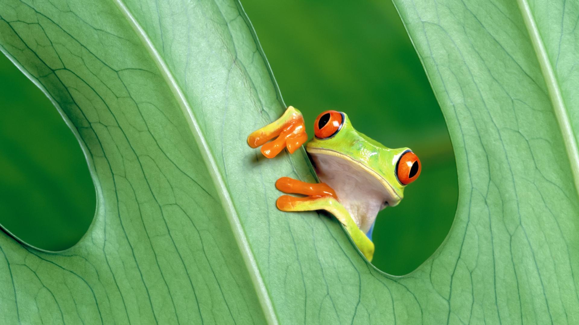 frog grean leaf