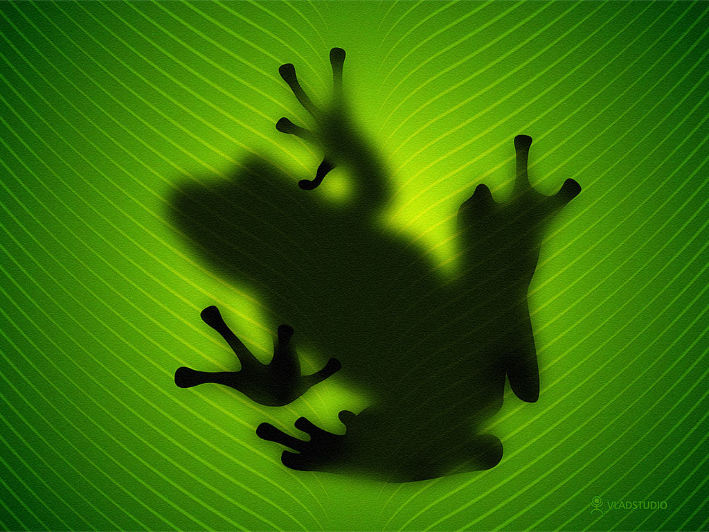 ... Frog wallpaper (see wallpaper).