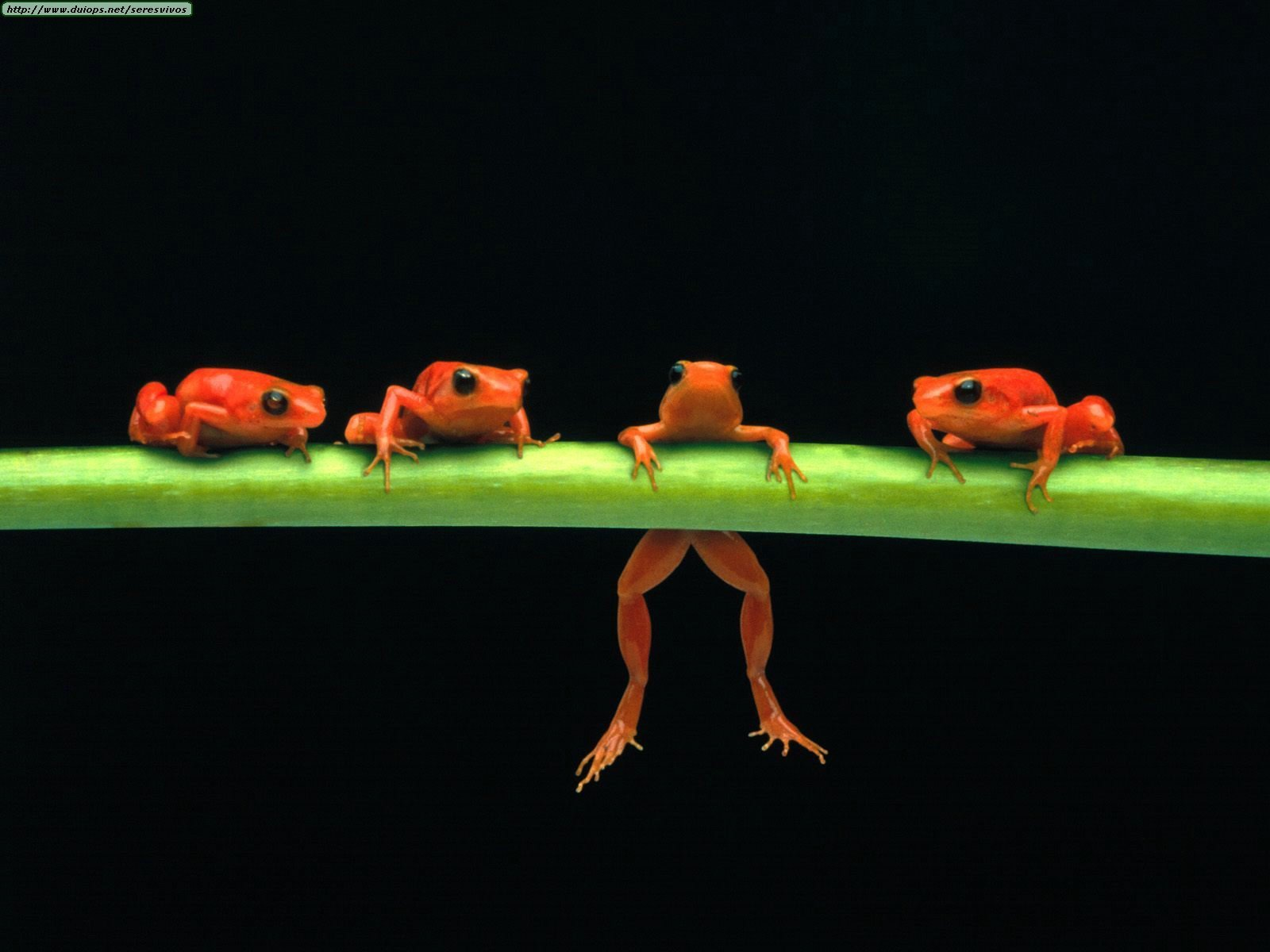 :D - frogs Wallpaper