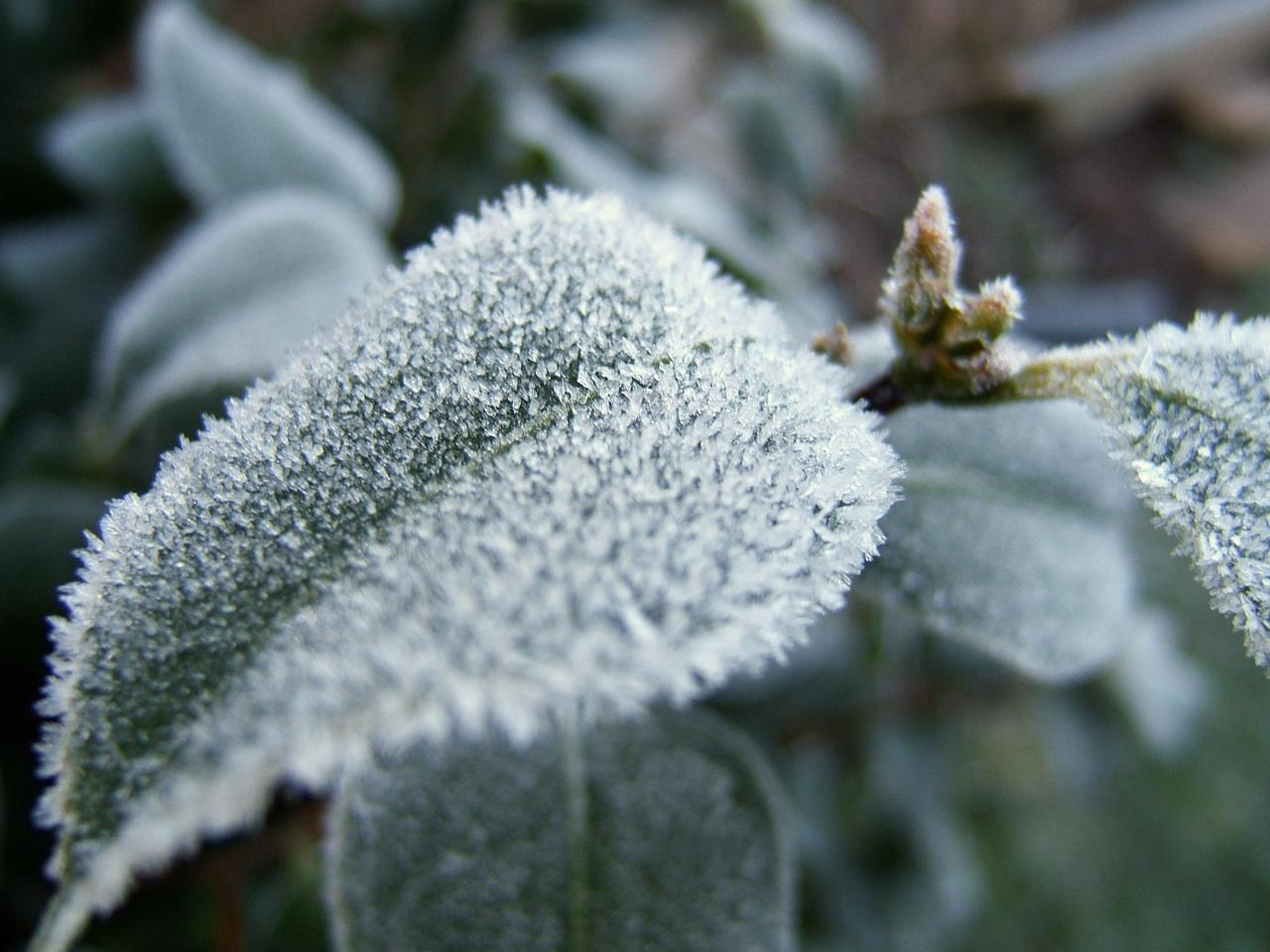 Tips For Saving Cold Damaged Plants ...