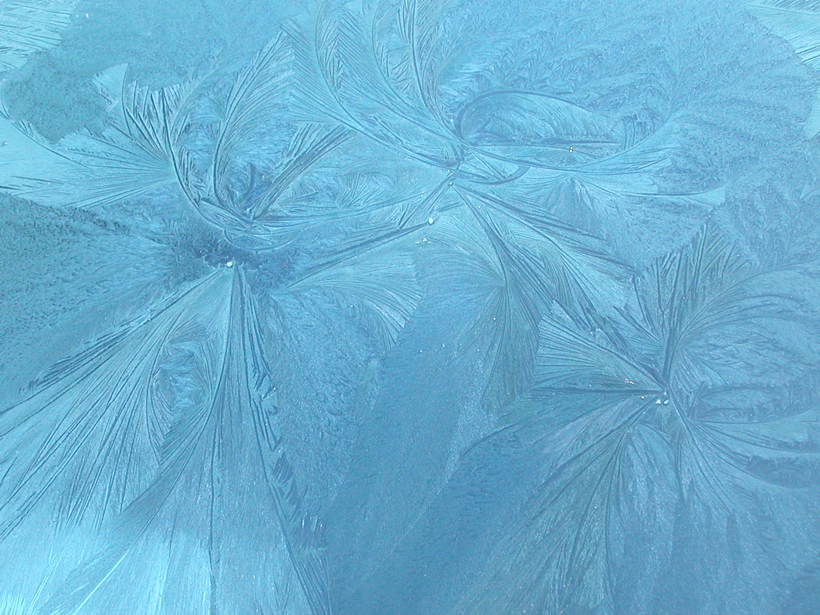 During a very cold night, the frost can make incredible patterns on glass. In the third of pictures, the sun rises just enough to begin shining through the ...