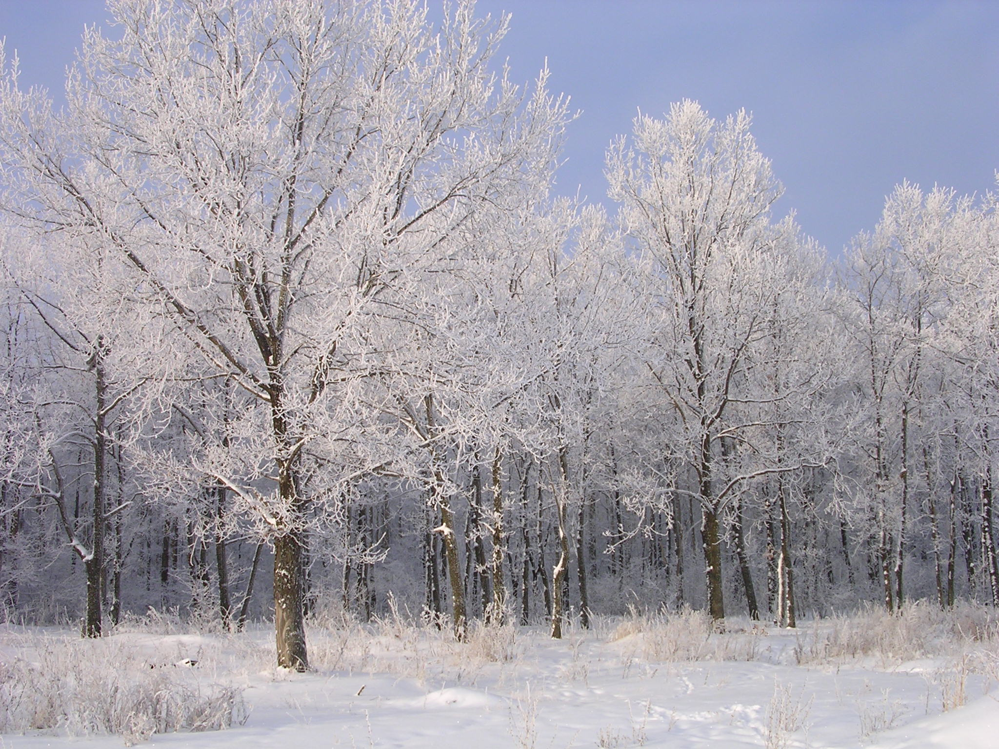 Frost Pictures