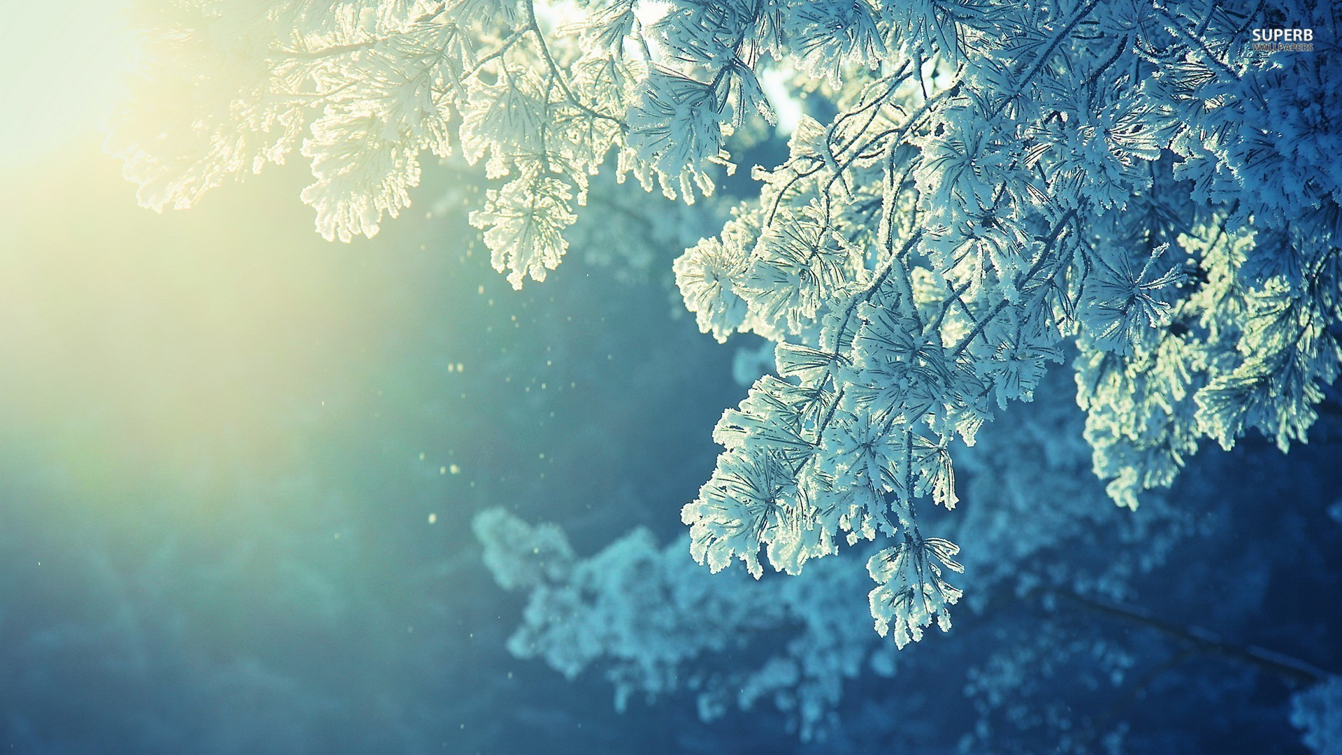 Frosty tree wallpaper 1920x1080