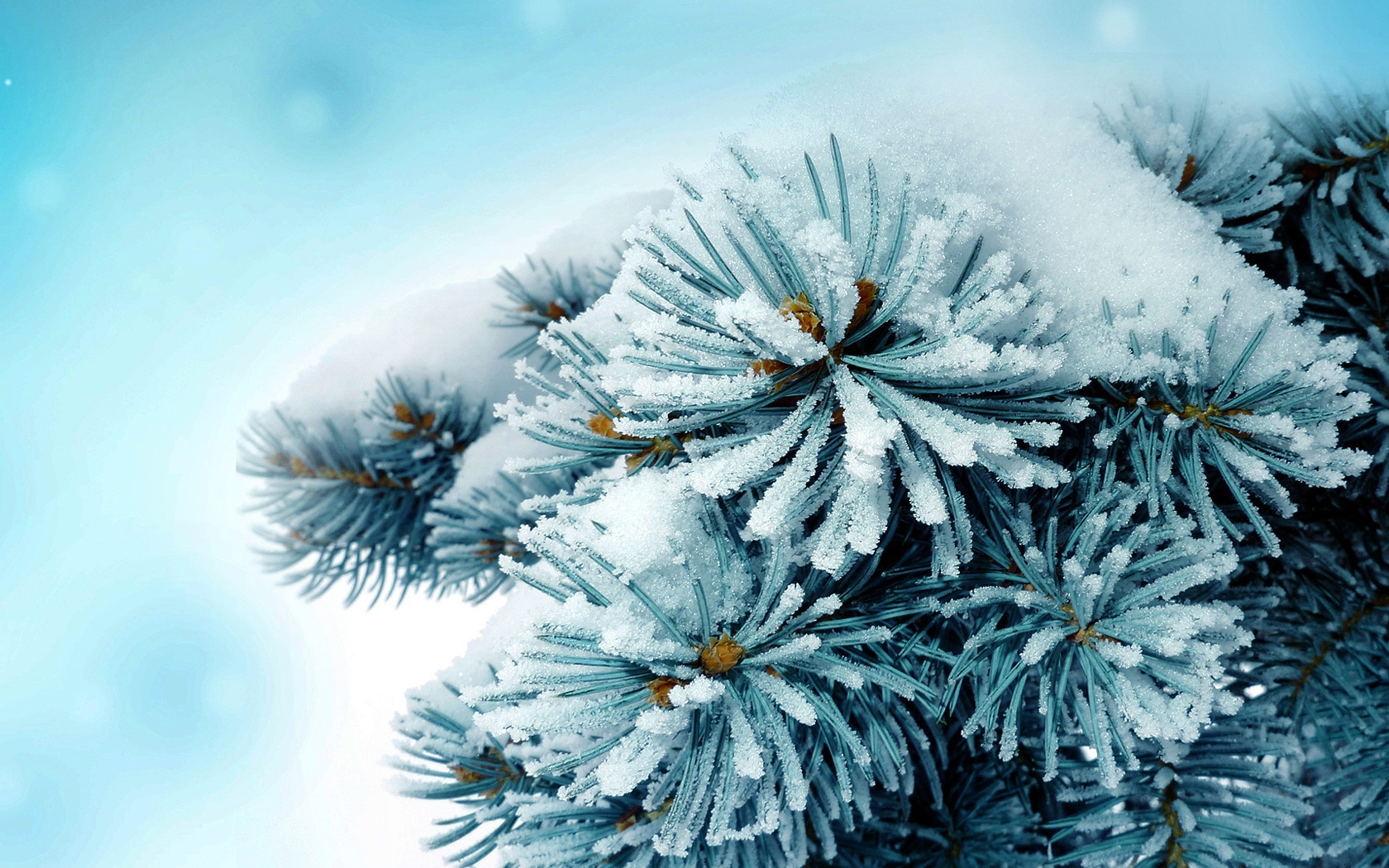 View: Frosty wallpapers and stock photos