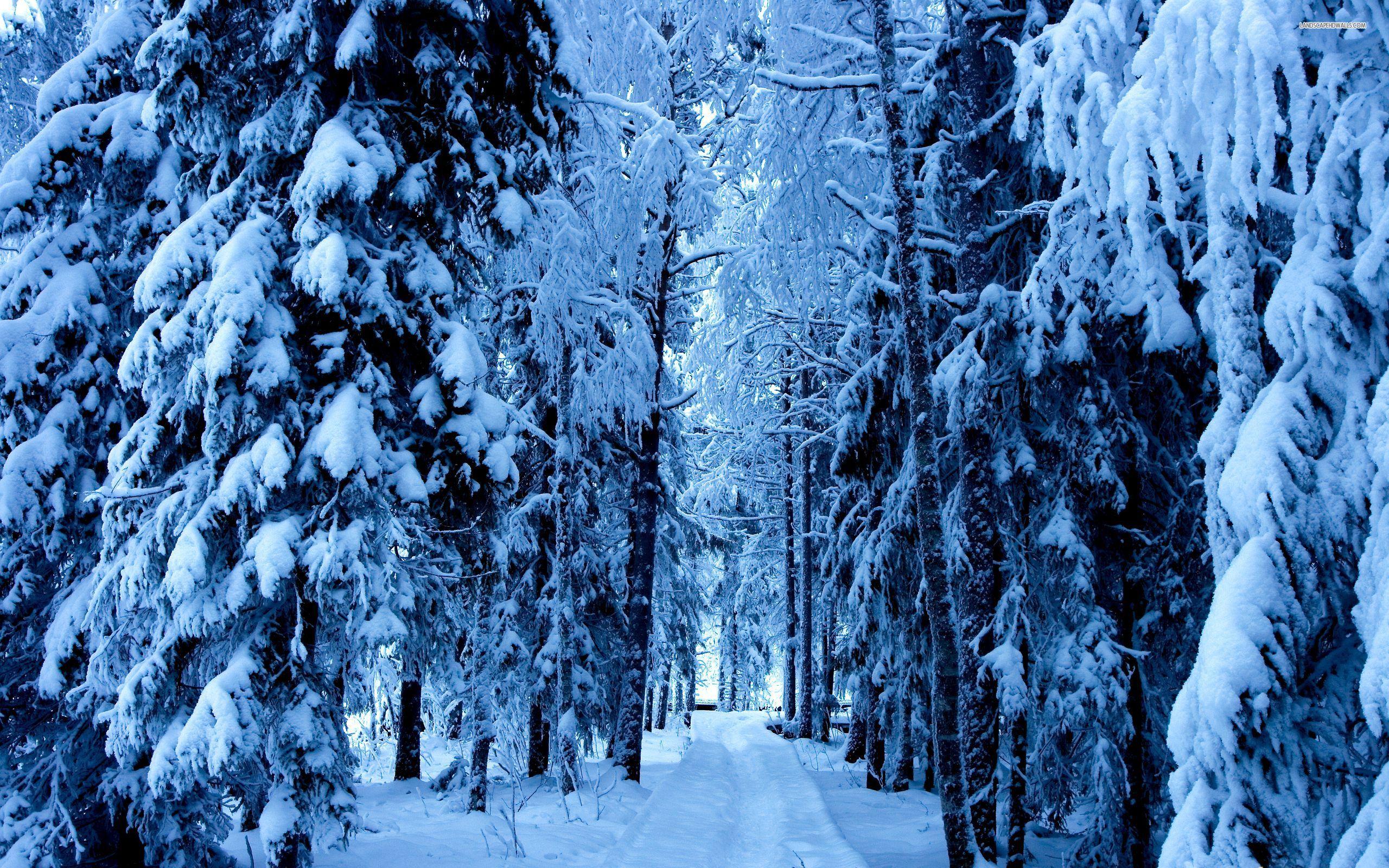 The Scenic Route: