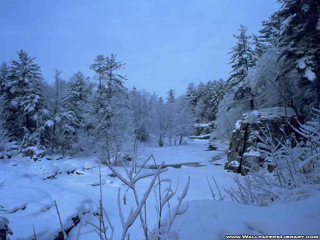 frozen forest, wallpaper, desktop, background, winter, download, nature, image