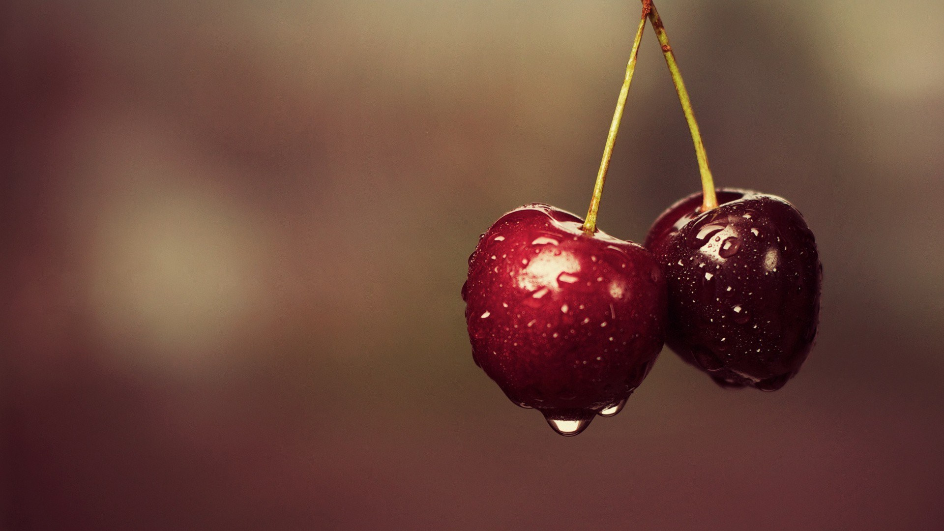 Fruits Cherries Drops Water Green Stems HD Wallpaper