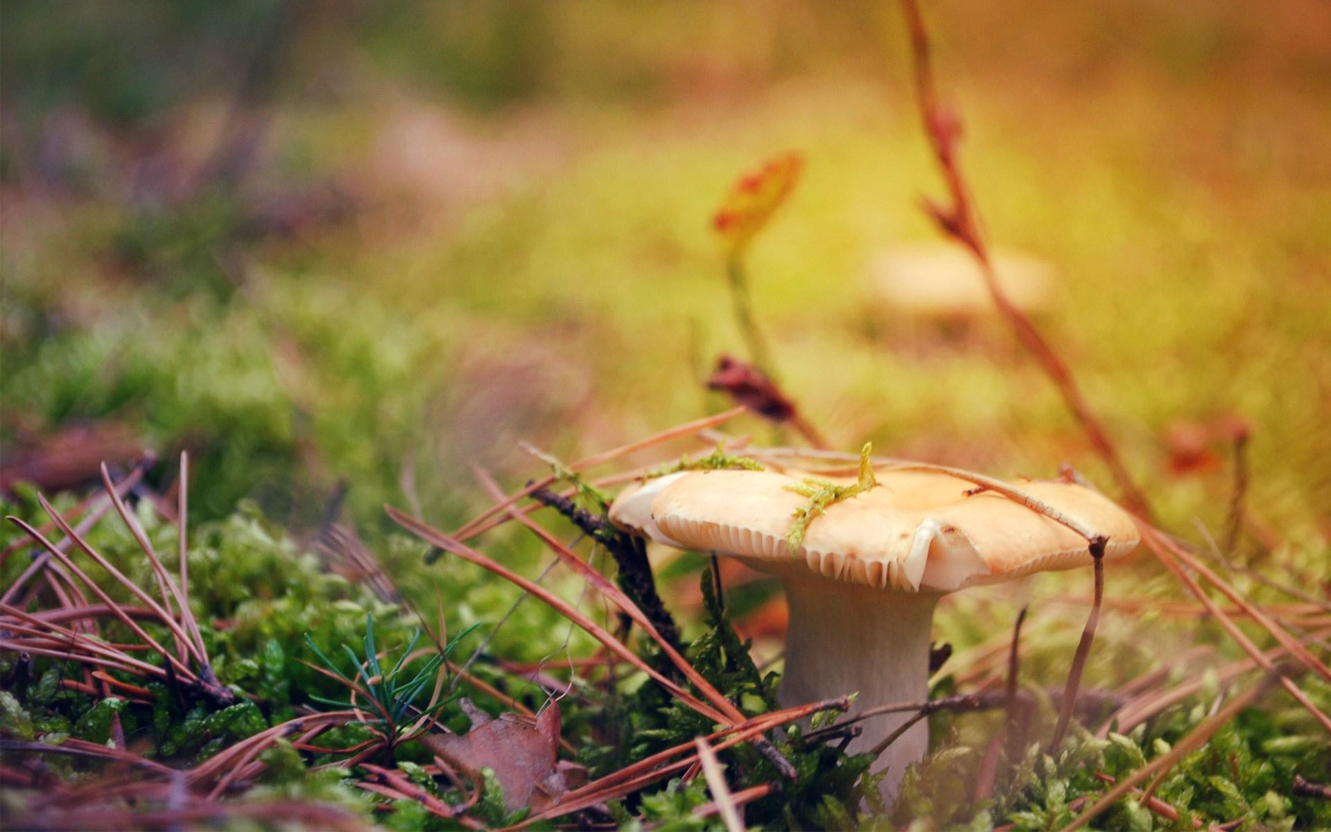Fungus Macro Autumn Leaves Needles Nature