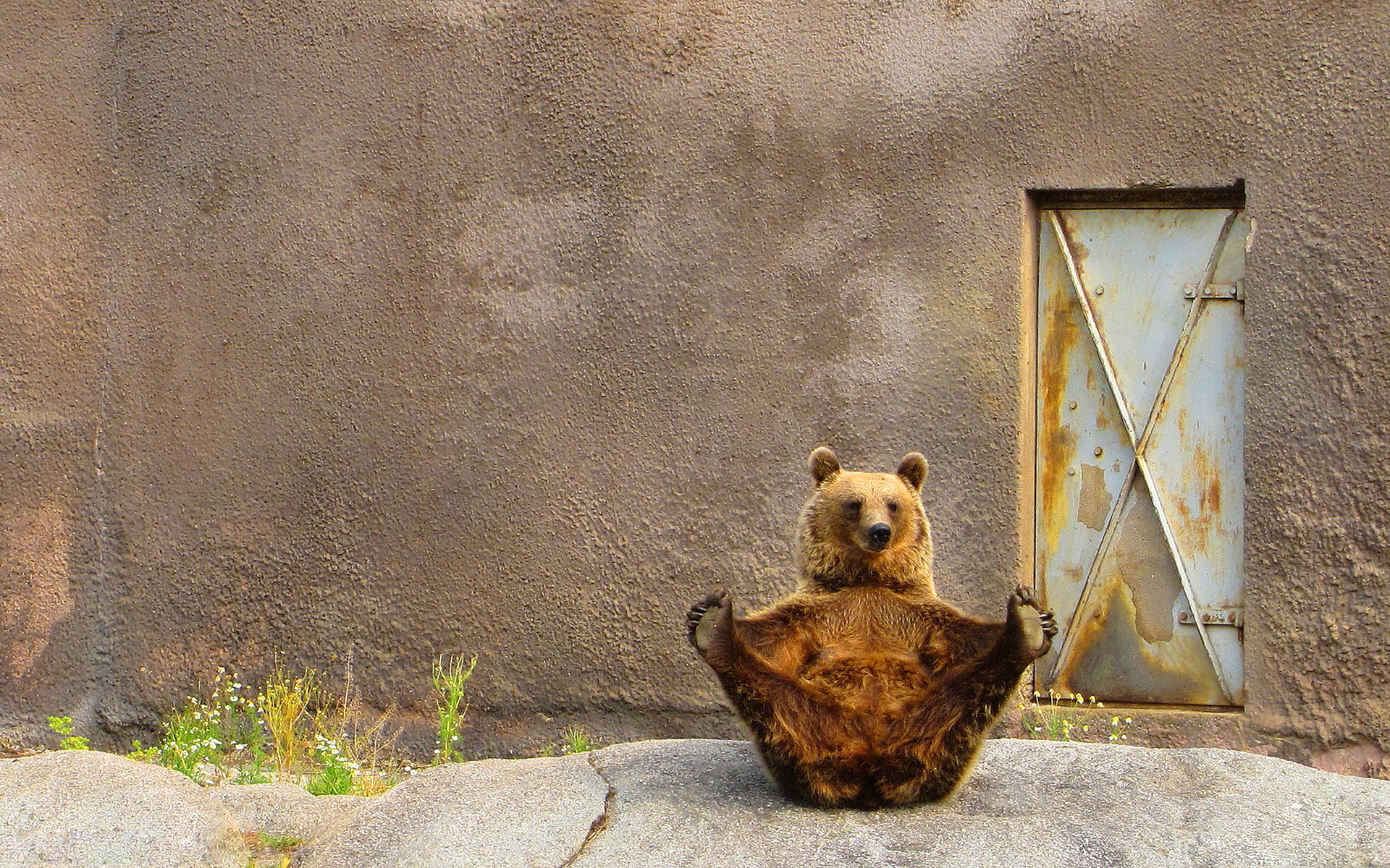 Funny bear pose