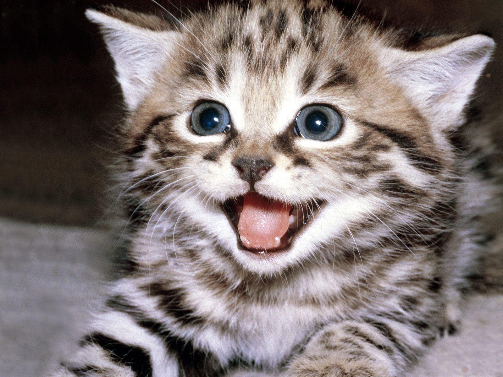 funny cat 02 ...