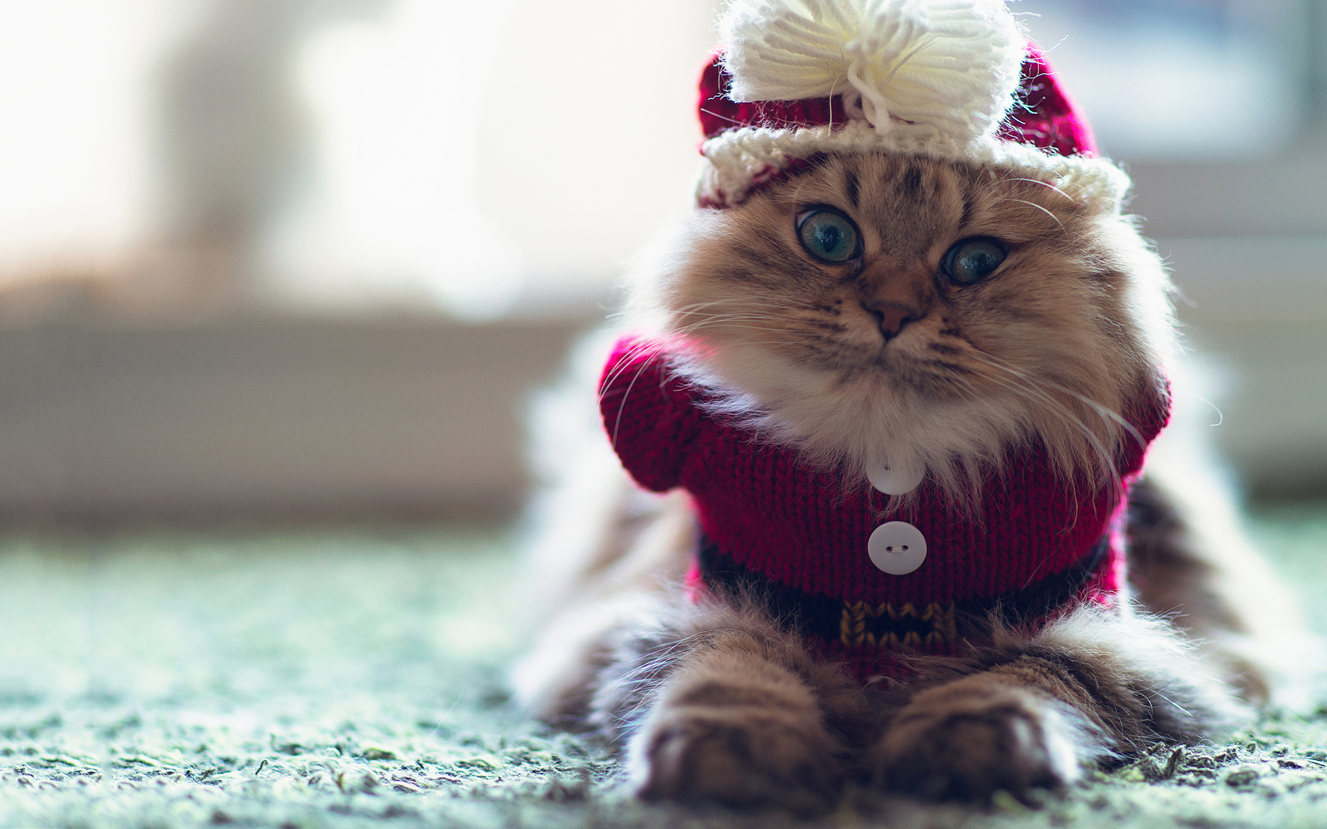 Funny clothed cat