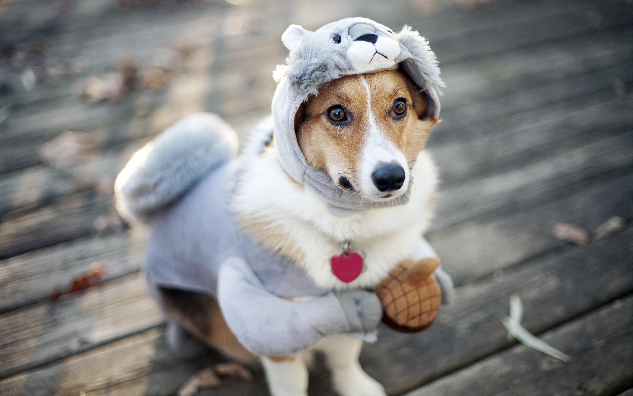 funny-dog