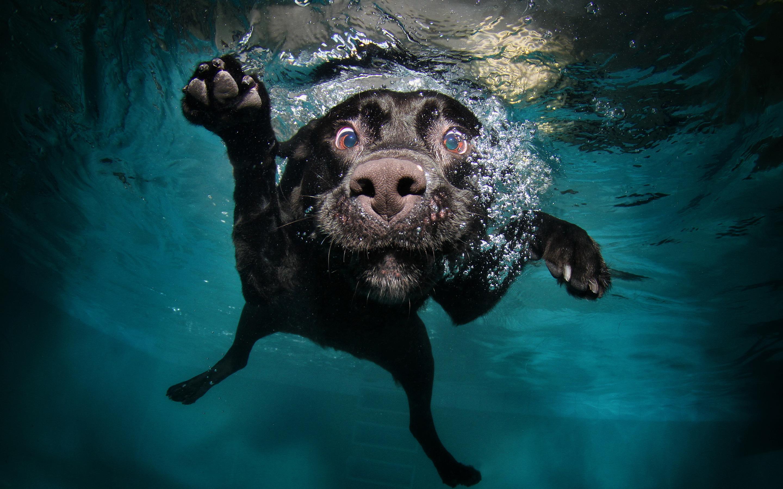 Funny dog diving