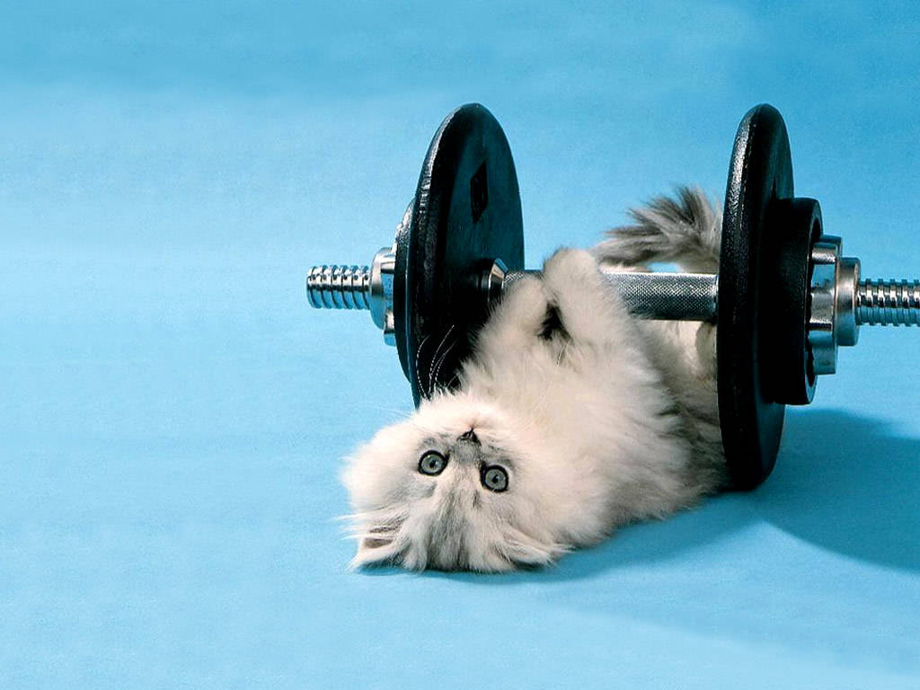 funny-picture-backgrounds-kitten-lifting-weights