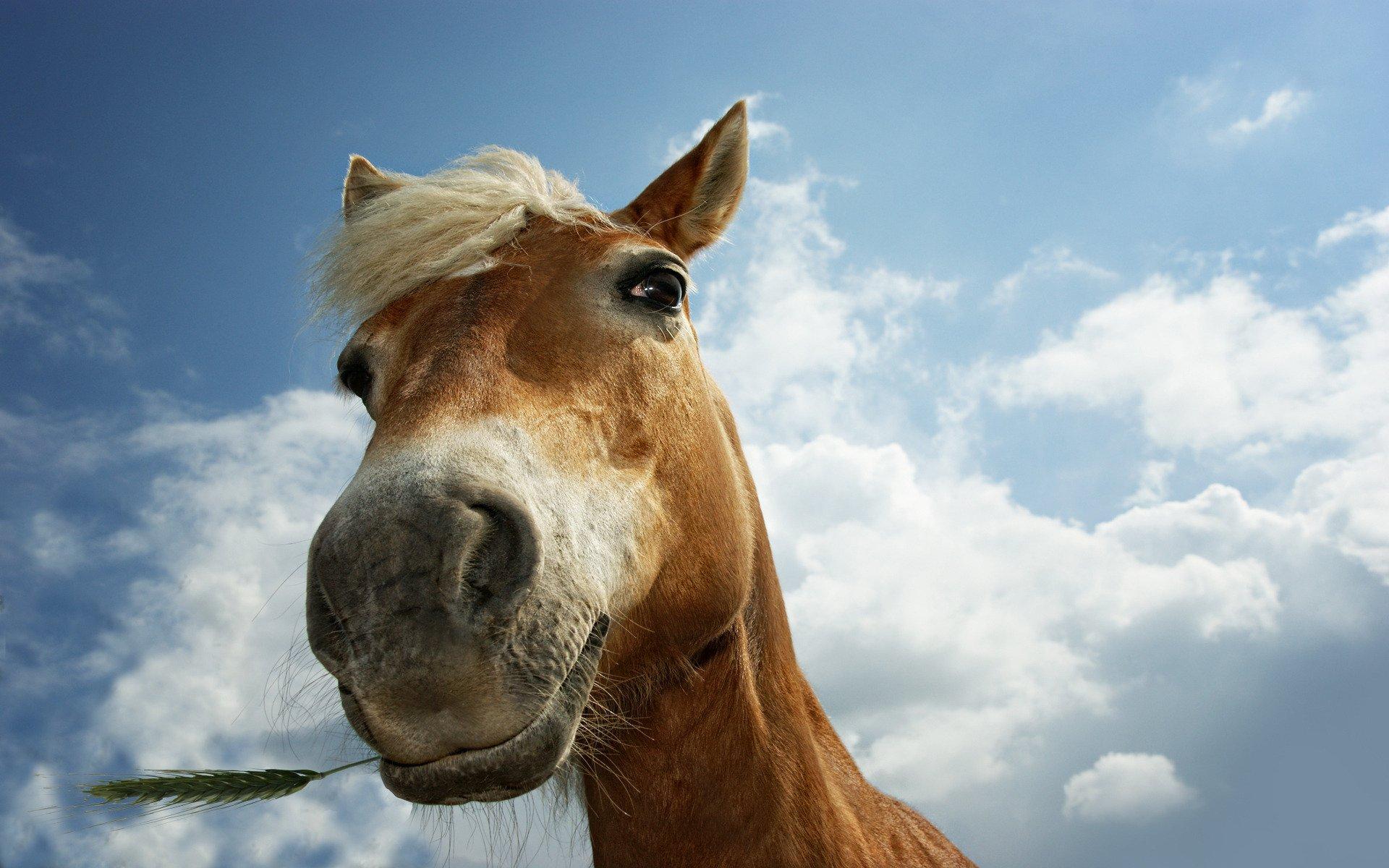 Funny Horse Closeup