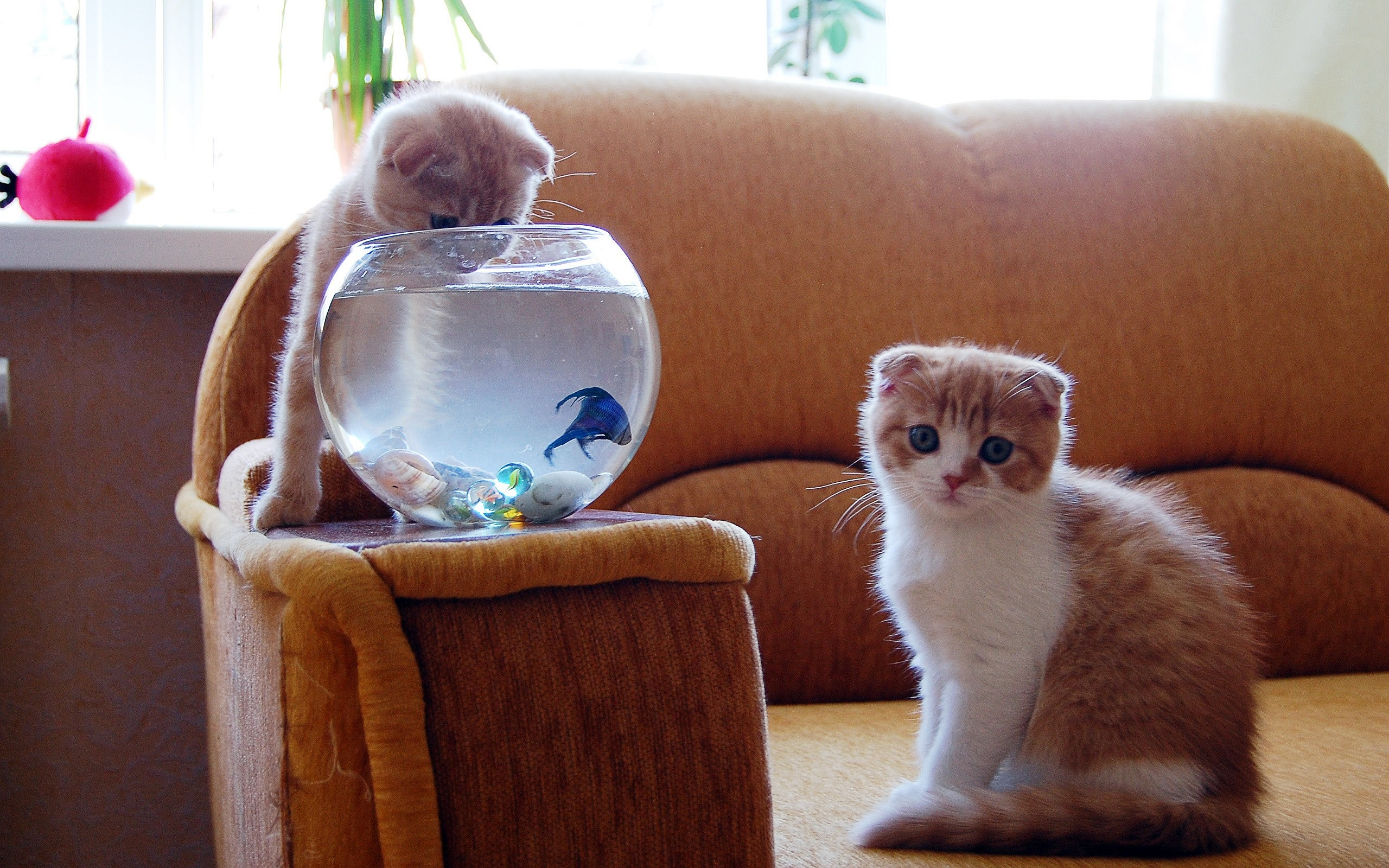 Funny Kittens Fish