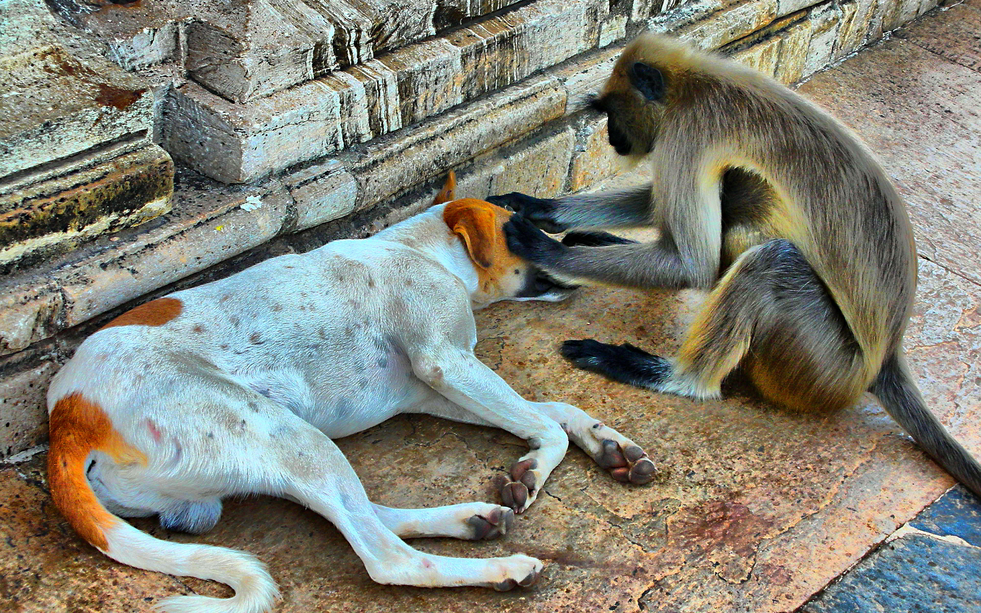 Funny monkey and dog