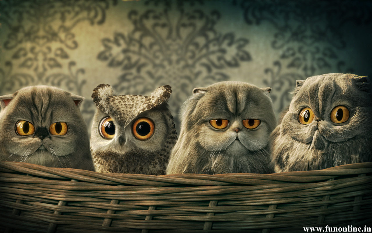 Funny Owl Wallpaper