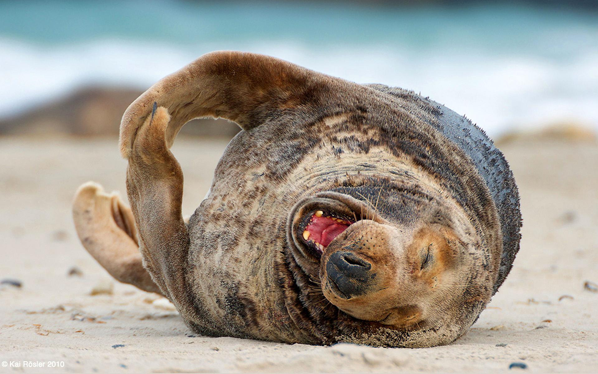 Funny sea lion