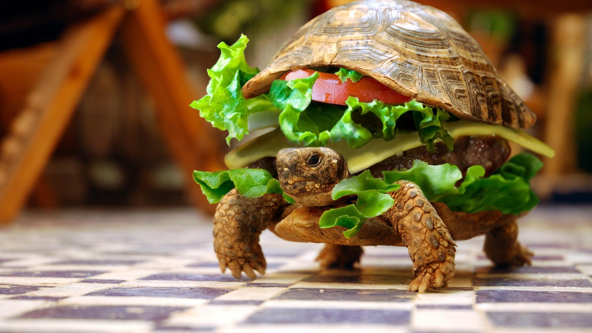 Funny Turtle Burger