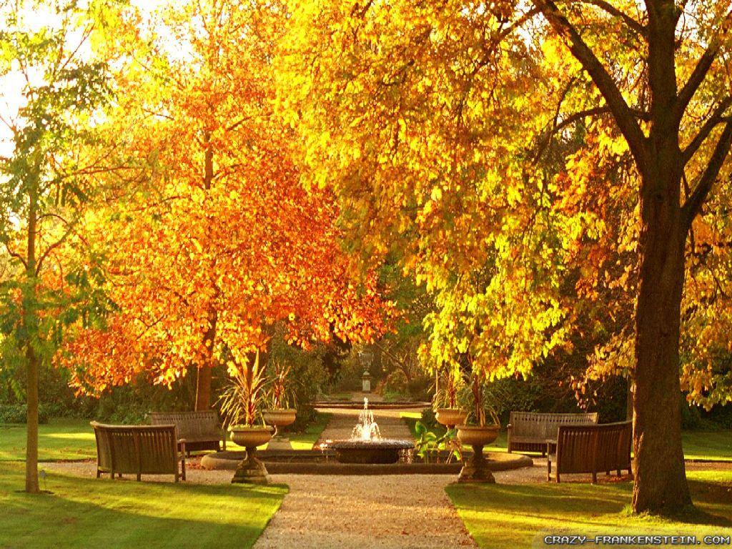 Garden Autumn