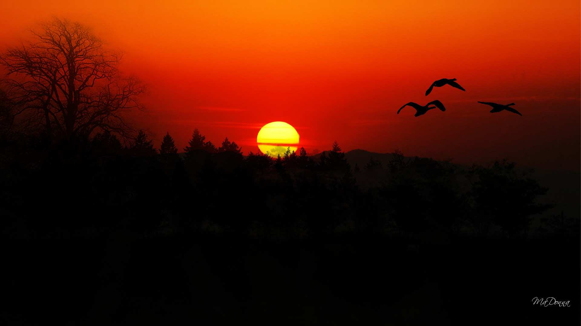 Geese Flight At Sunset HD wallpapers