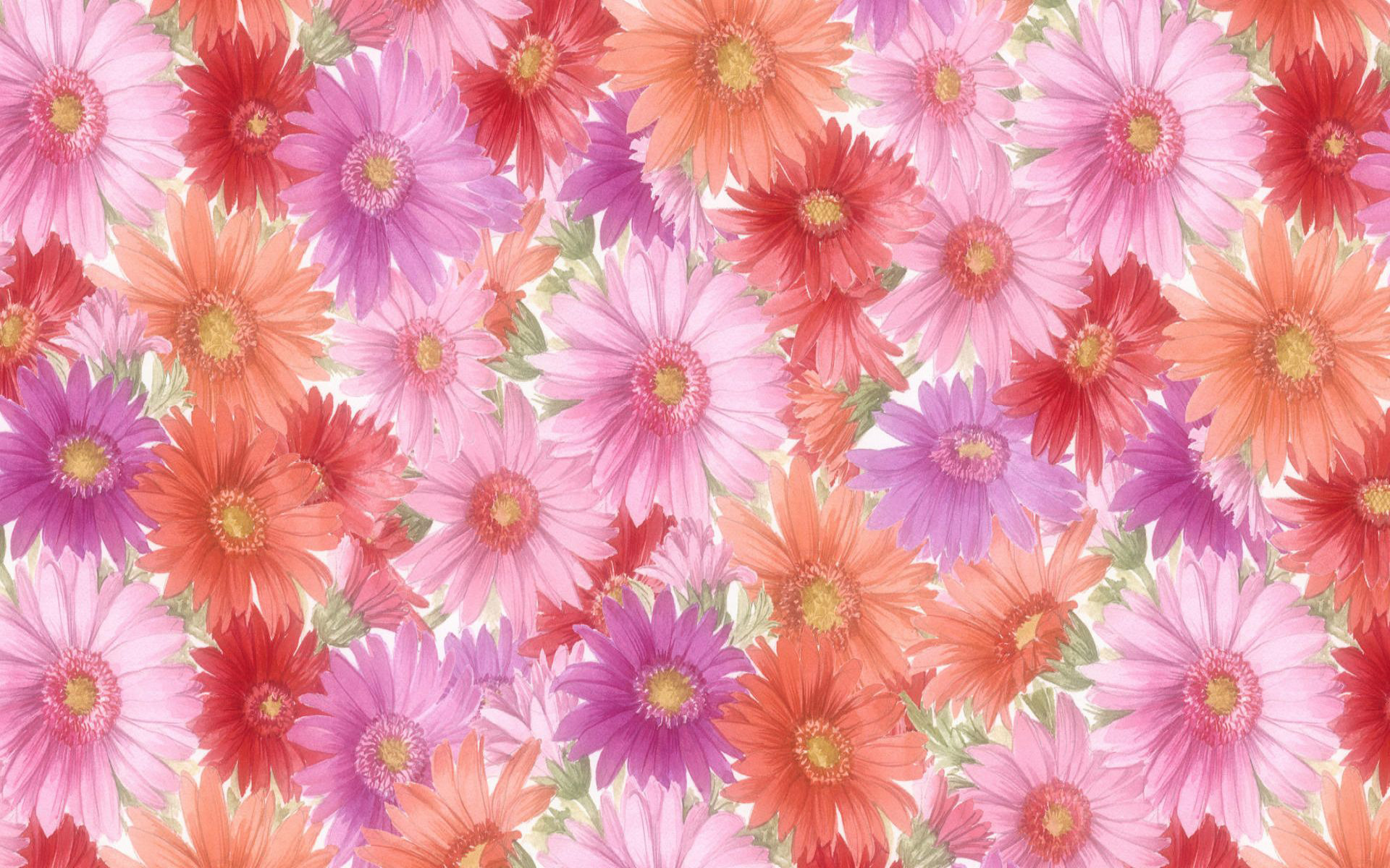 Gerberas wallpaper