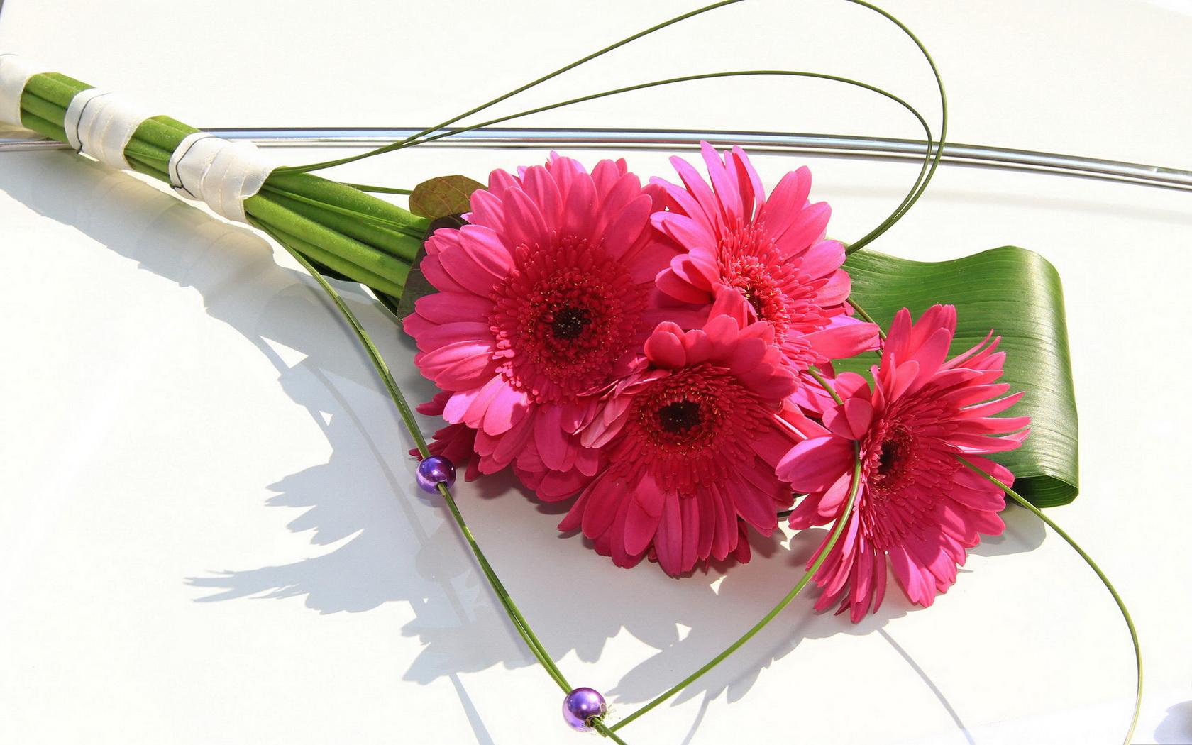 Gerberas Flowers