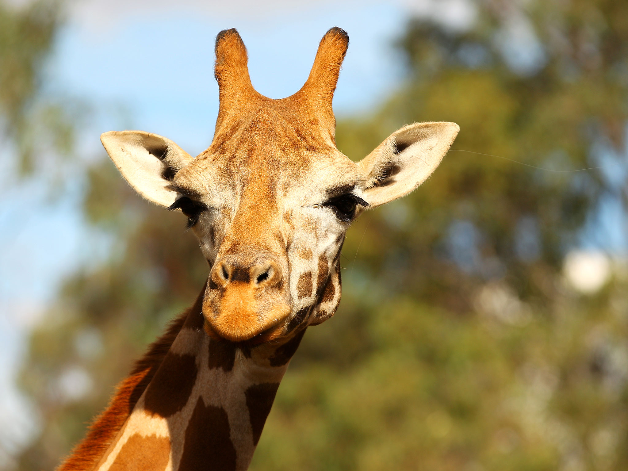 Owner of giraffe killed after hitting head on bridge in South Africa 'could face action' - Africa - World - The Independent
