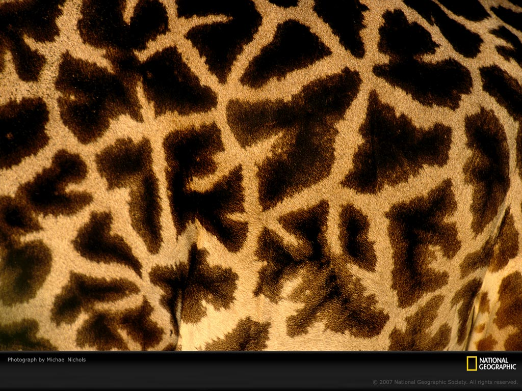 This photo is from Patterns in Nature: Animals