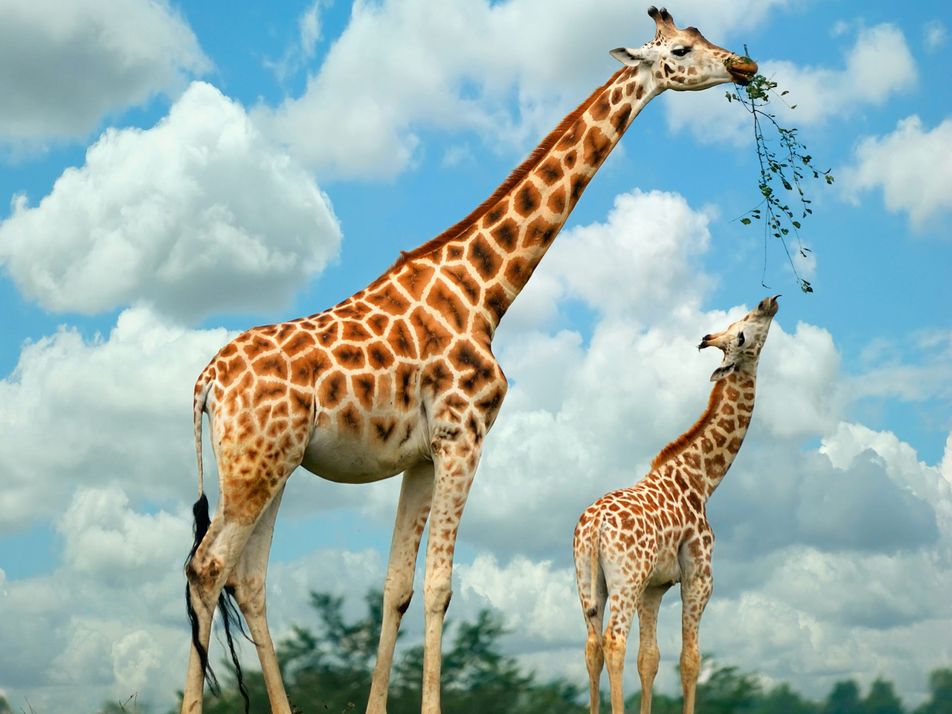 Desktop backgrounds · Backgrounds · 3D-Graphics Family of giraffes