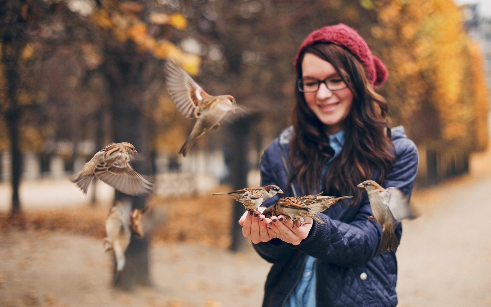 Girl Birds Sparrows Photo HD Wallpaper