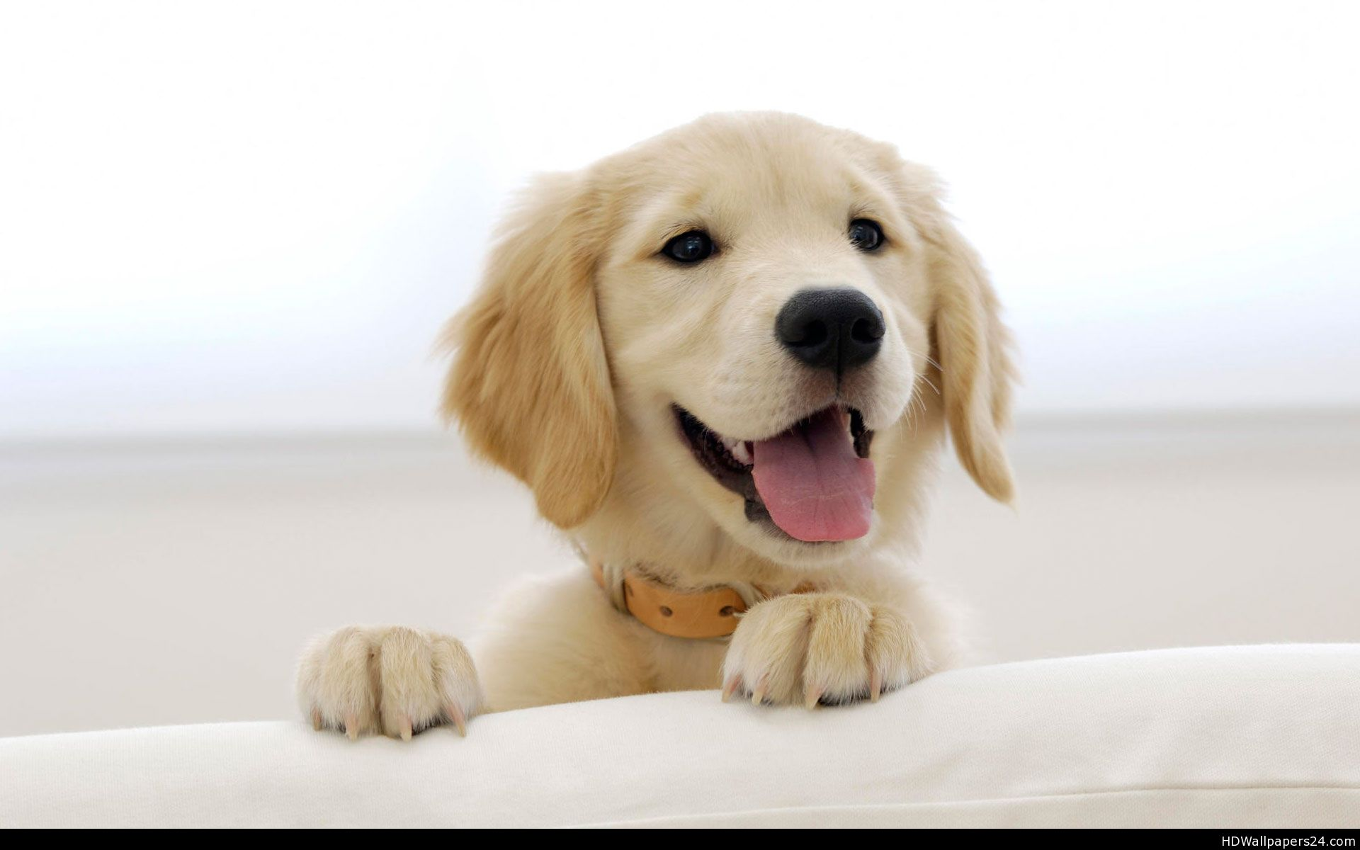 golden-retriever-wallpaper-01.jpg ...