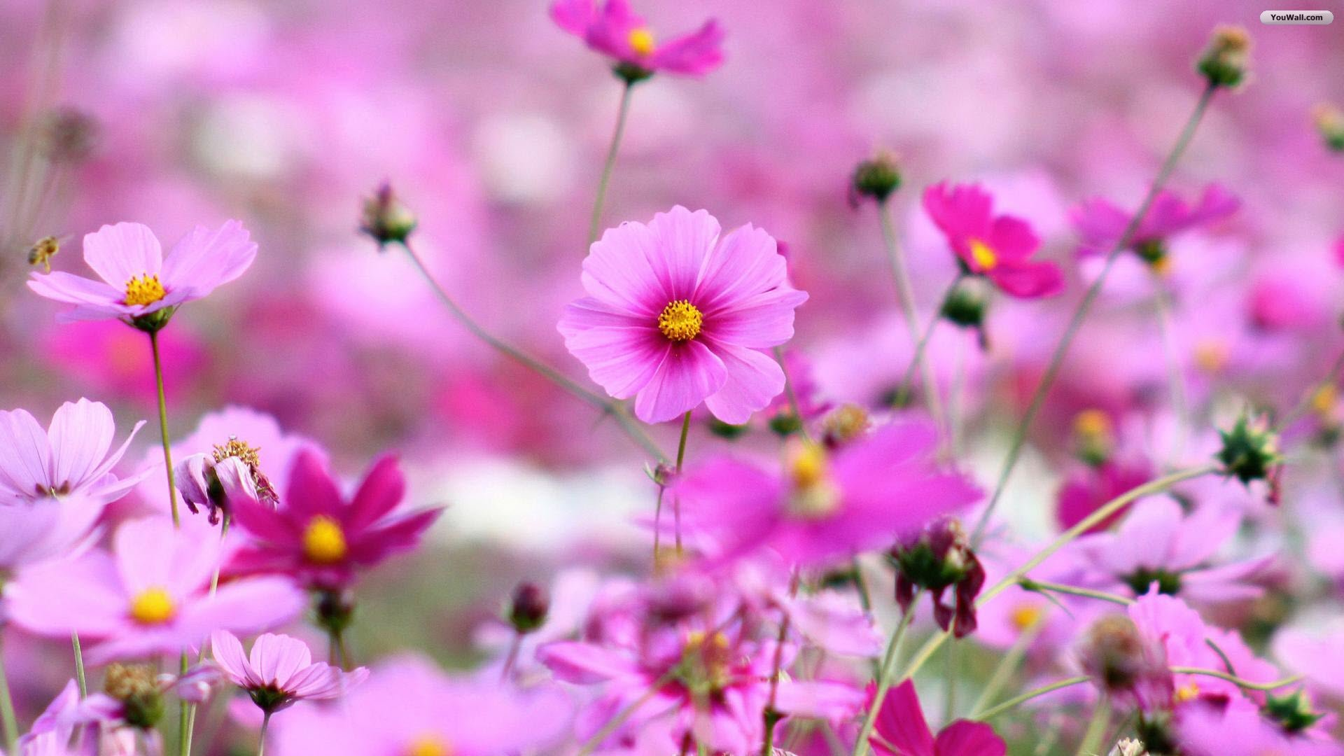 Good flower s wallpaper 1920x1080 23129 good flower wallpapers voltagebd Image collections