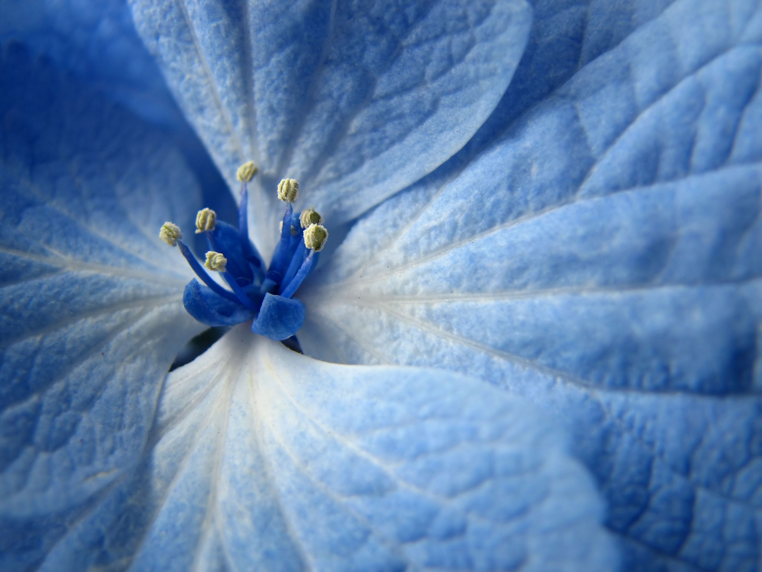 Gorgeous Blue Flowers Wallpaper