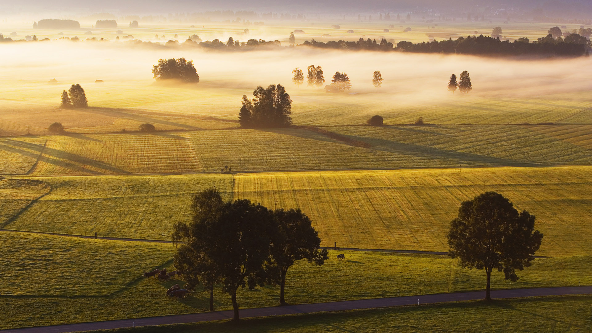 Gorgeous Fog Wallpaper
