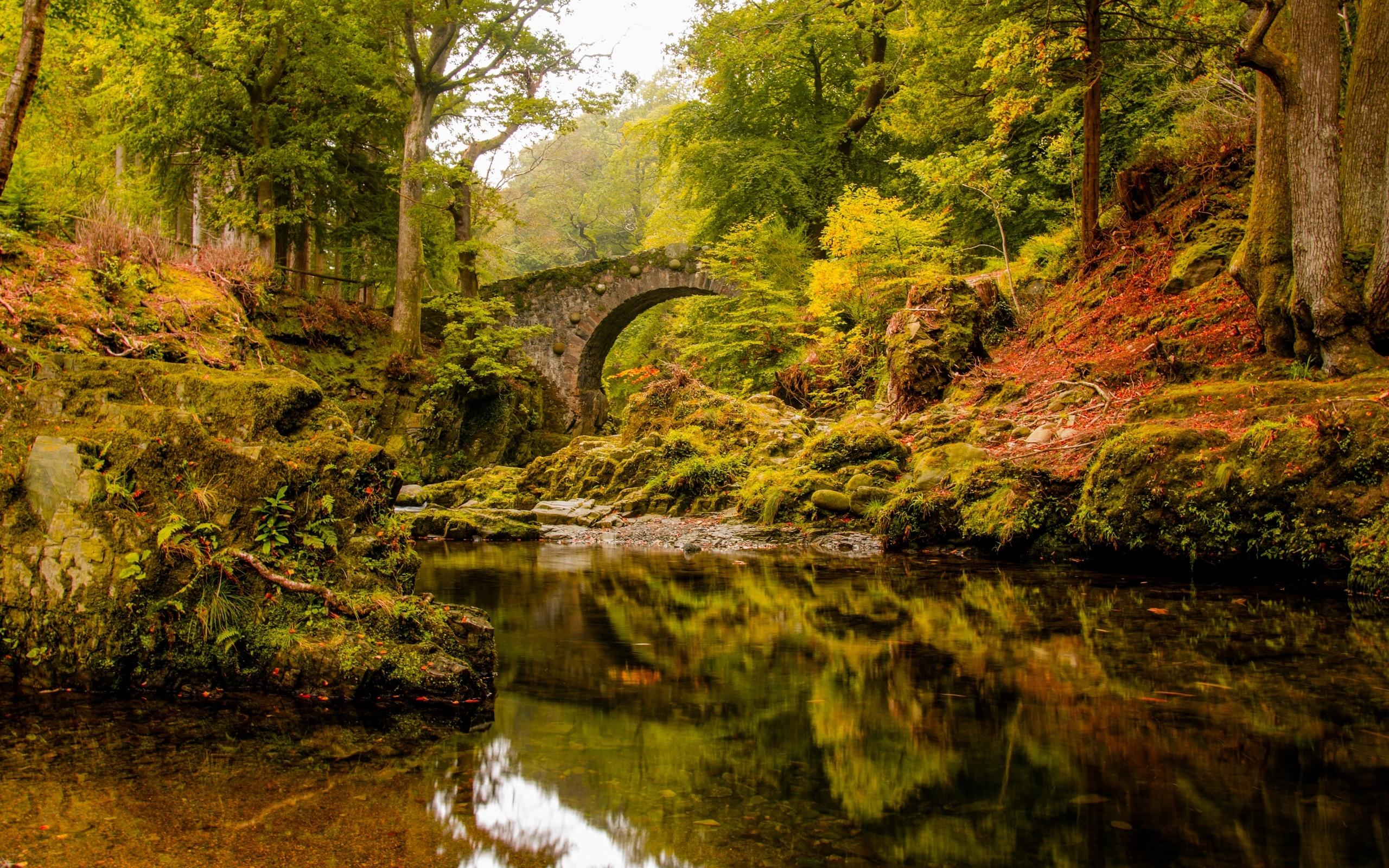 Gorgeous Forest Bridge Wallpaper