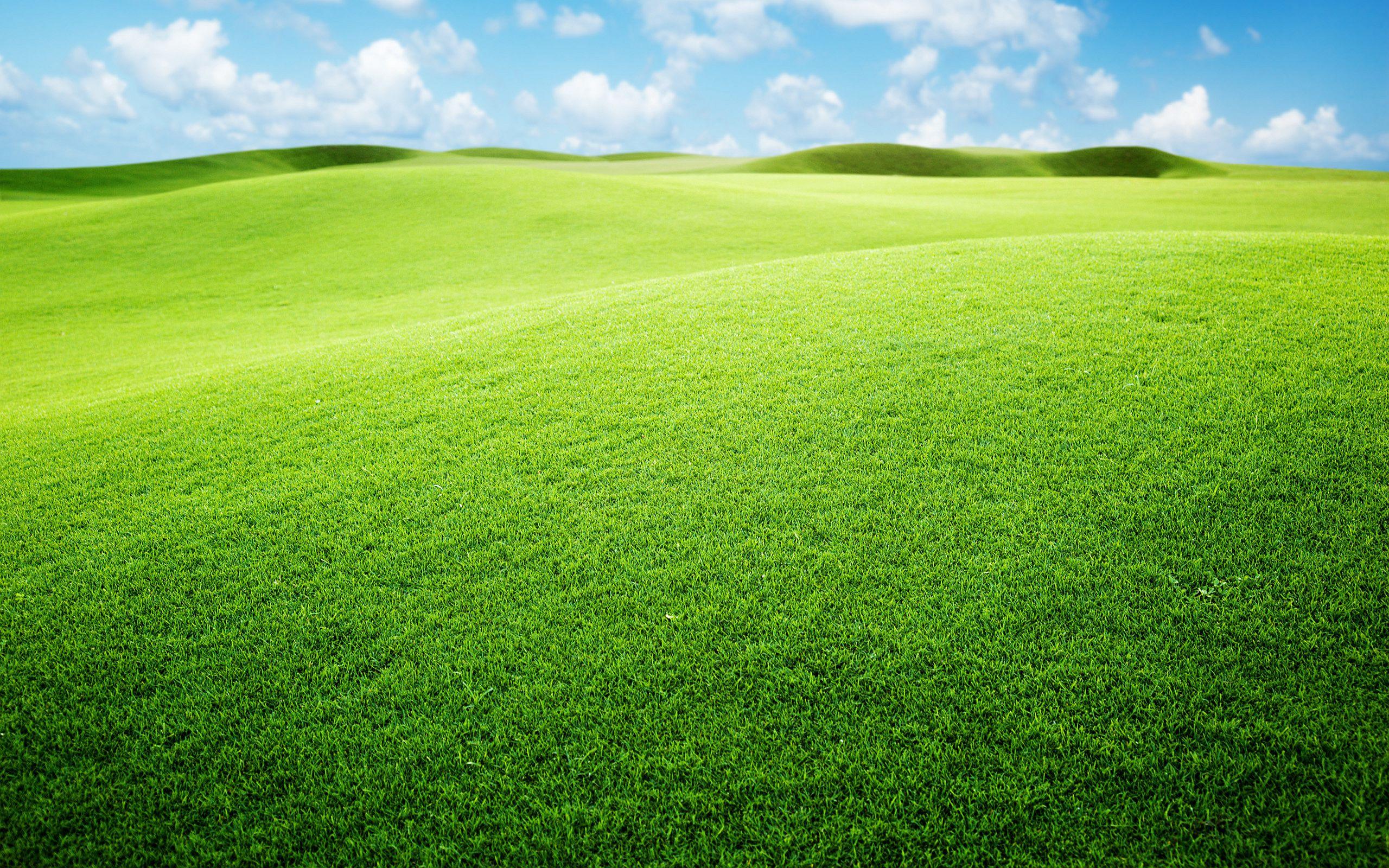 Gorgeous Grasslands