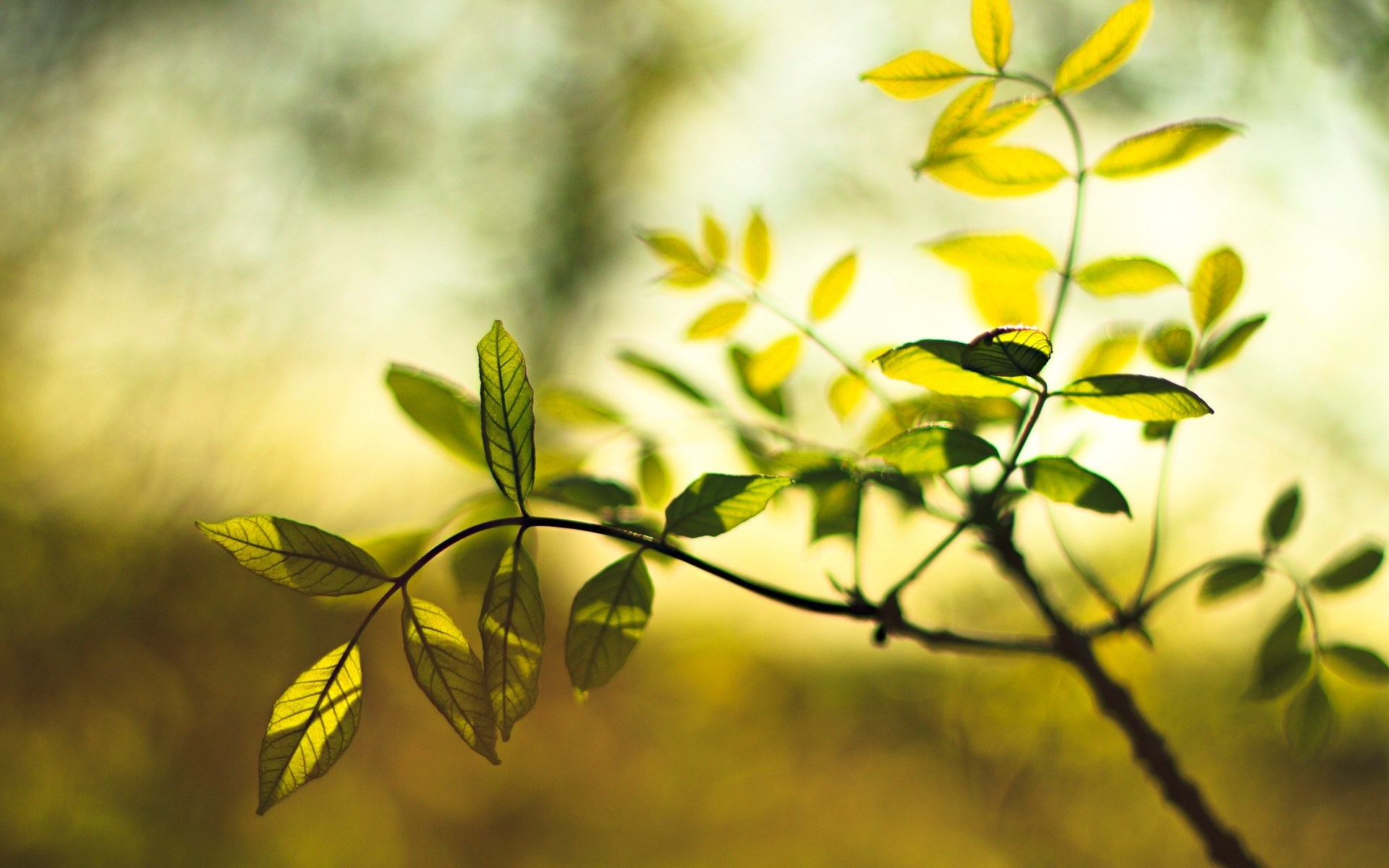 Gorgeous Leaves Macro Wallpaper