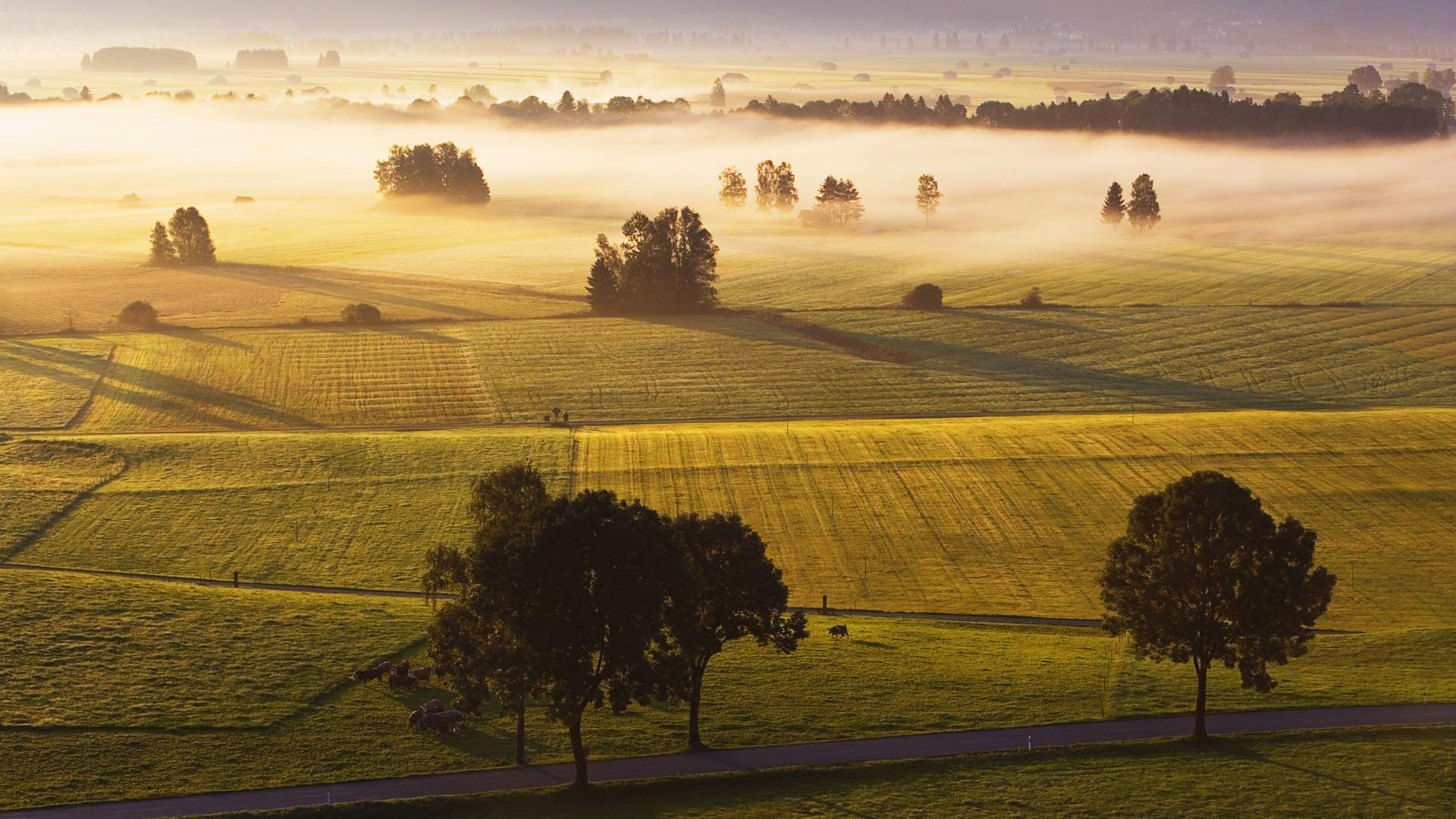 Gorgeous Morning Fog Wallpaper