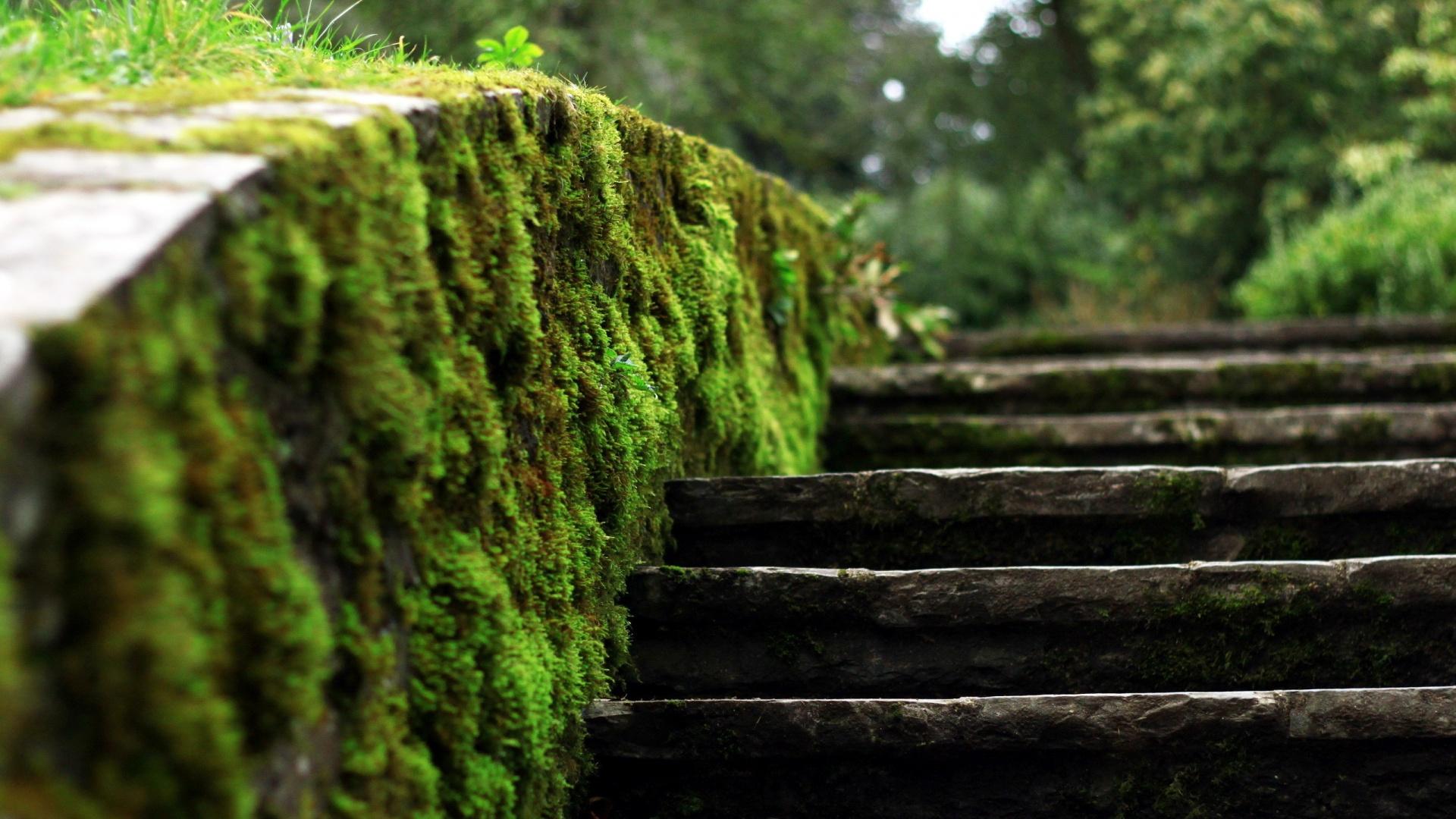Gorgeous Moss Wallpaper