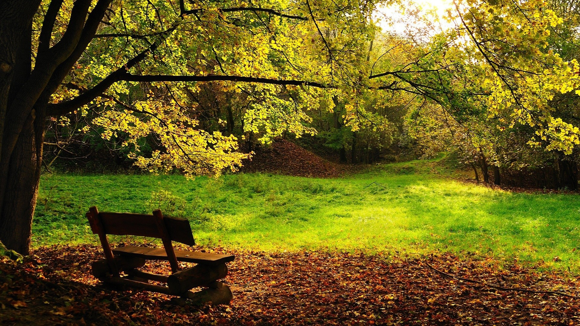 Gorgeous Park Bench Wallpaper