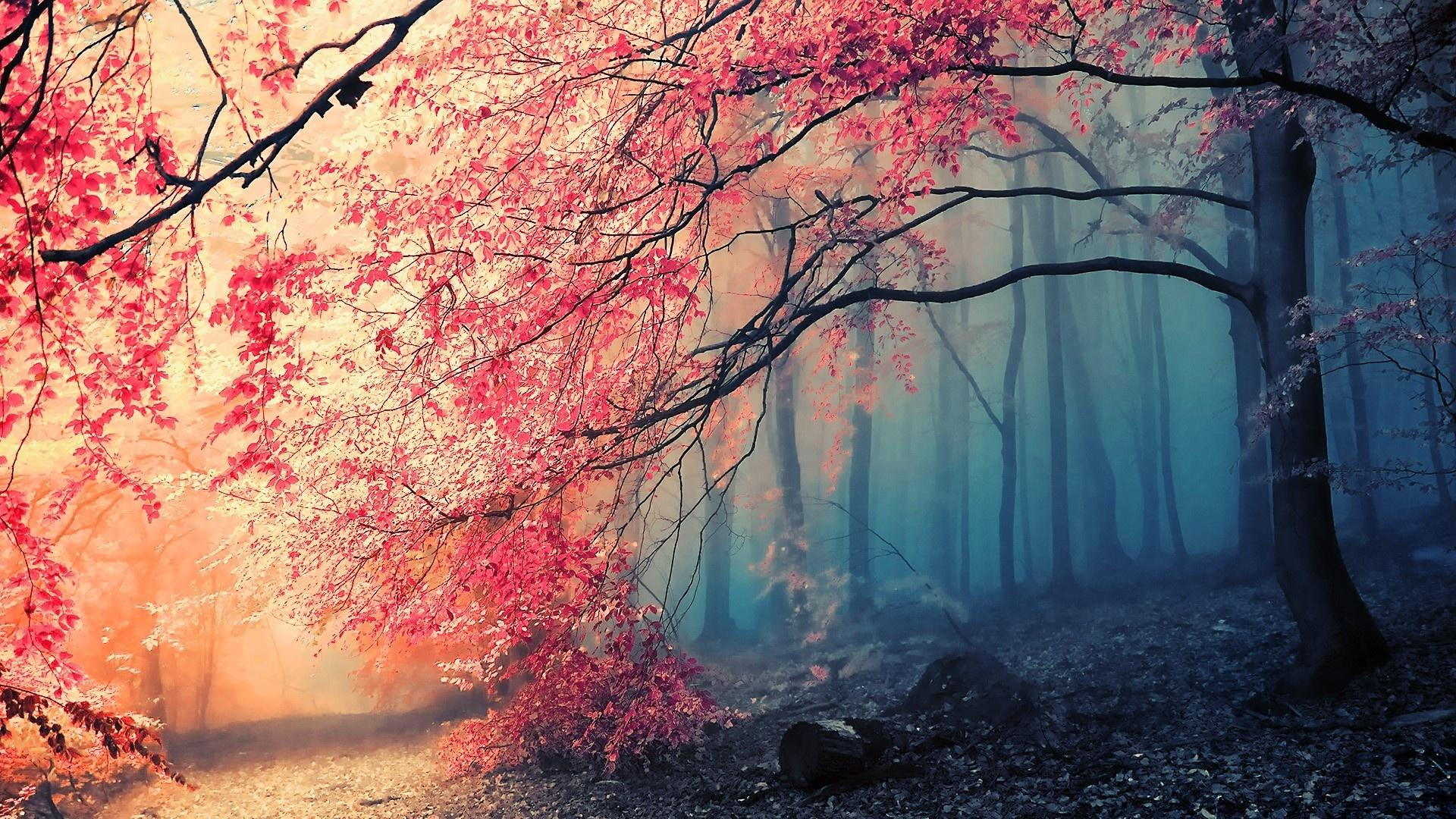 Gorgeous Forest Colors In Autumn Wallpaper #39229 - Resolution 1920x1080 px